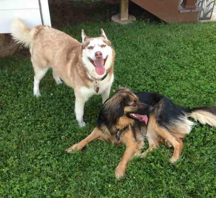 Frostyn and Bandit FKA Betsy