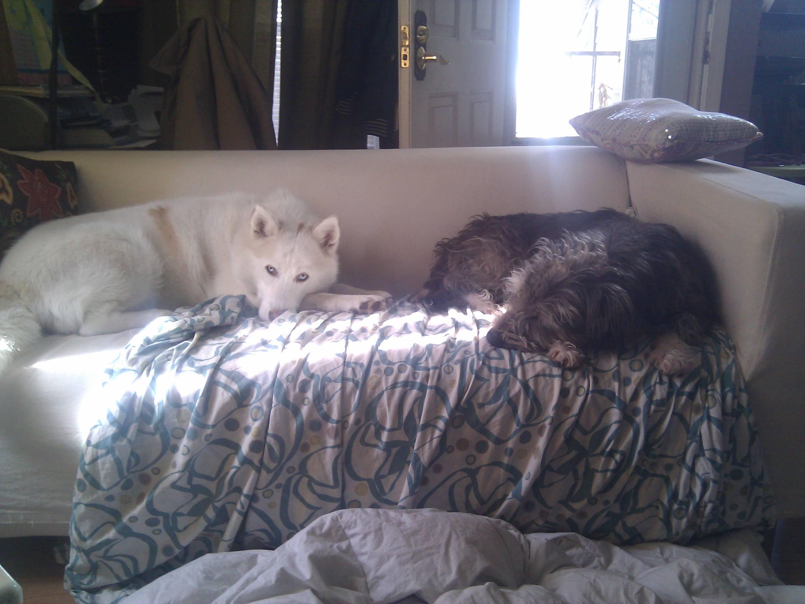 Gracie and Odin FKA Morgan