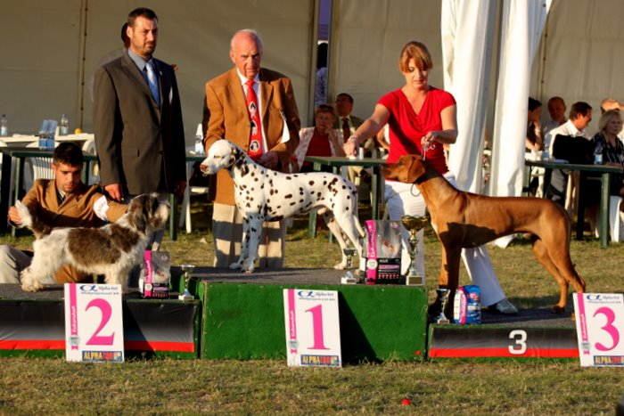 Dius Cassius by Luanda-9 months old-Hungarian Junior Champion