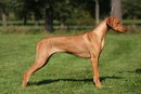 Dreamed Yman by Luanda-8 1/2 months-BIS baby and BIS puppy