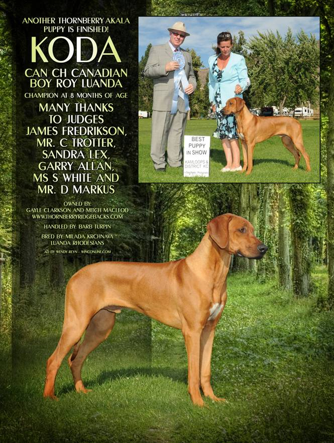 2011 Ad for Koda from winning Best Puppy in Show
