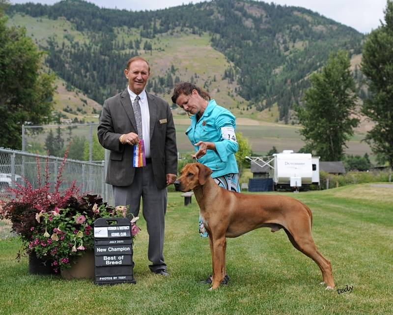 Dexter winning Best of Breed and New Champion