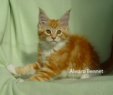 Alwaro Bennet when he was a kitten