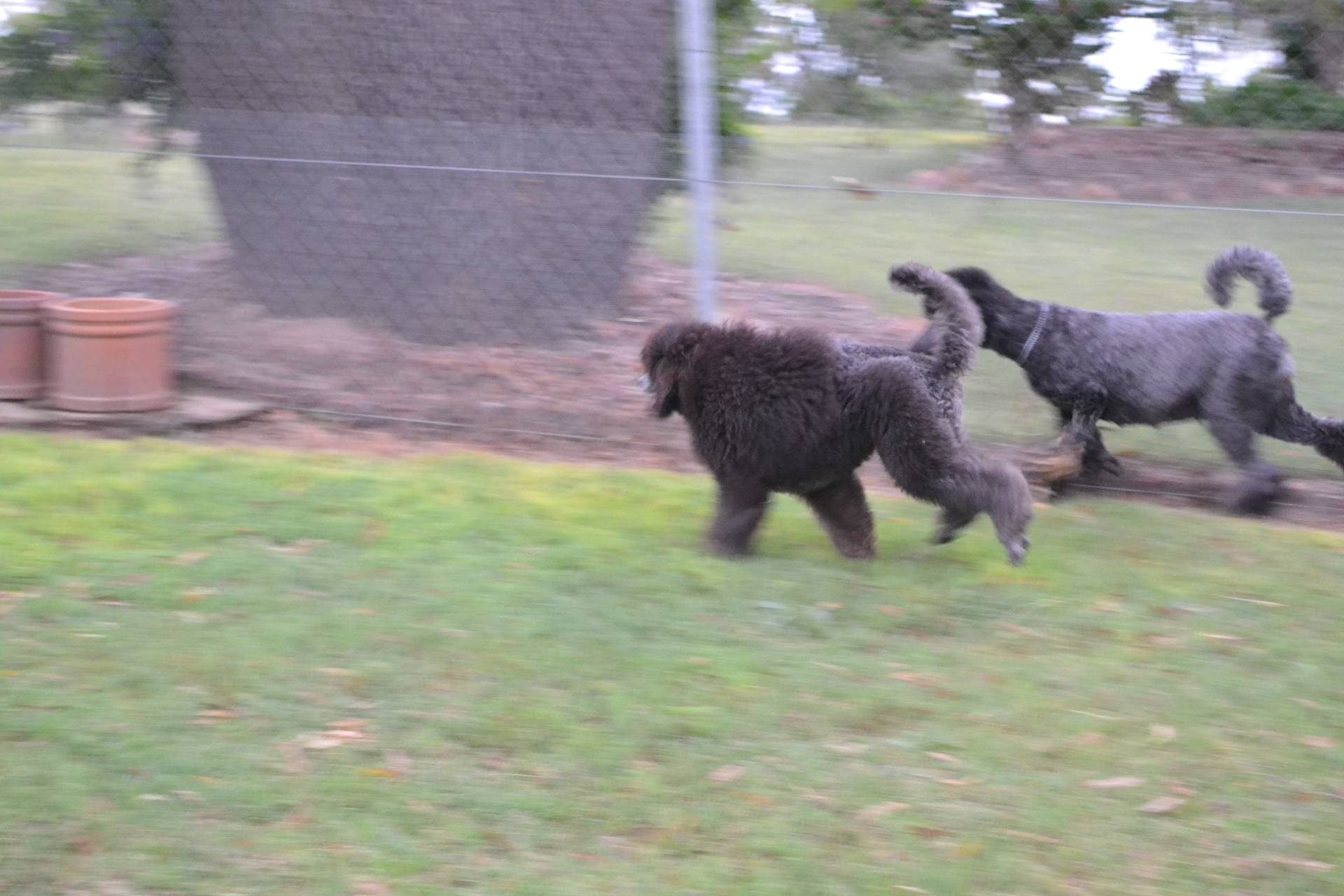 running with her nephew Slade