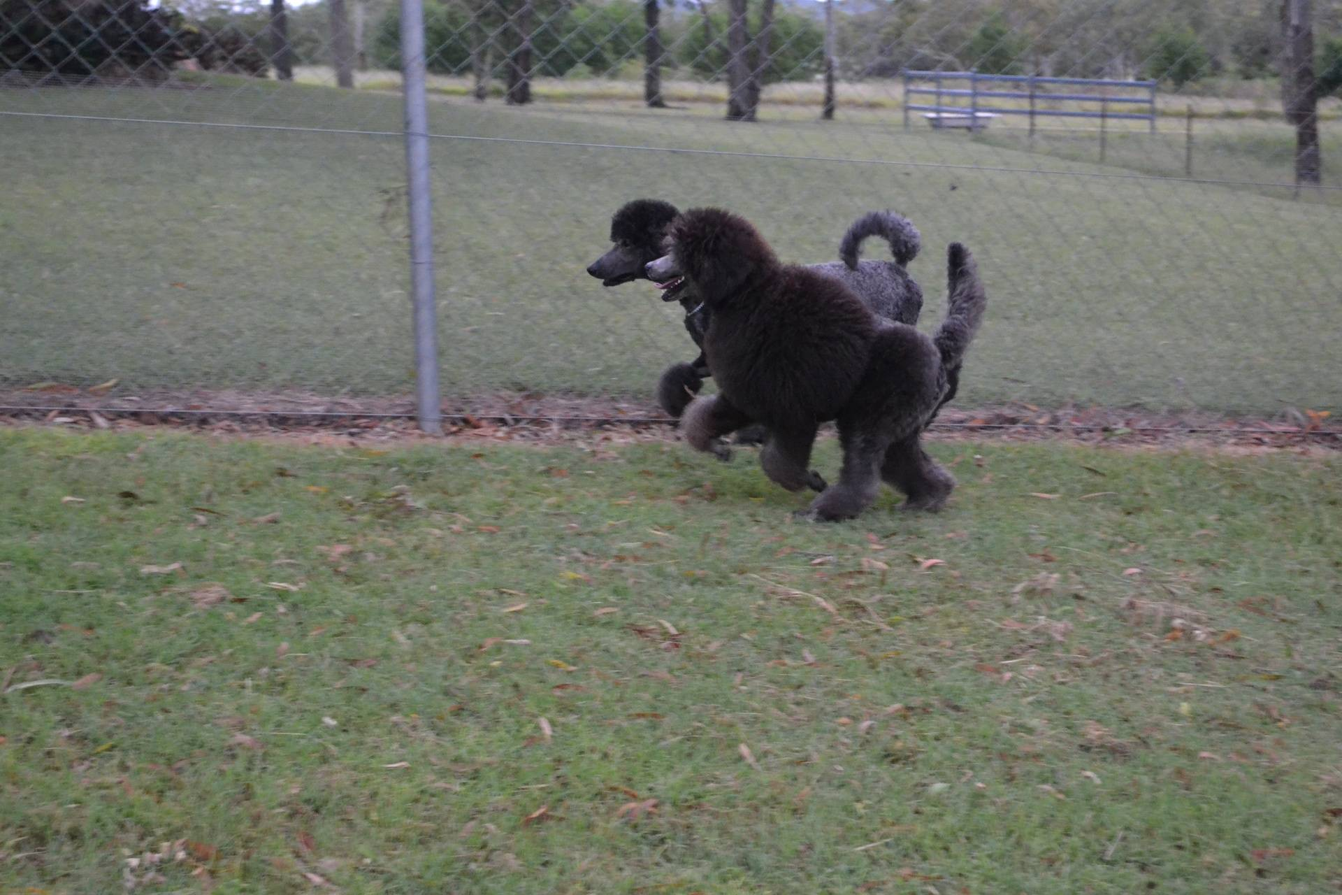 Running with his aunt Opal
