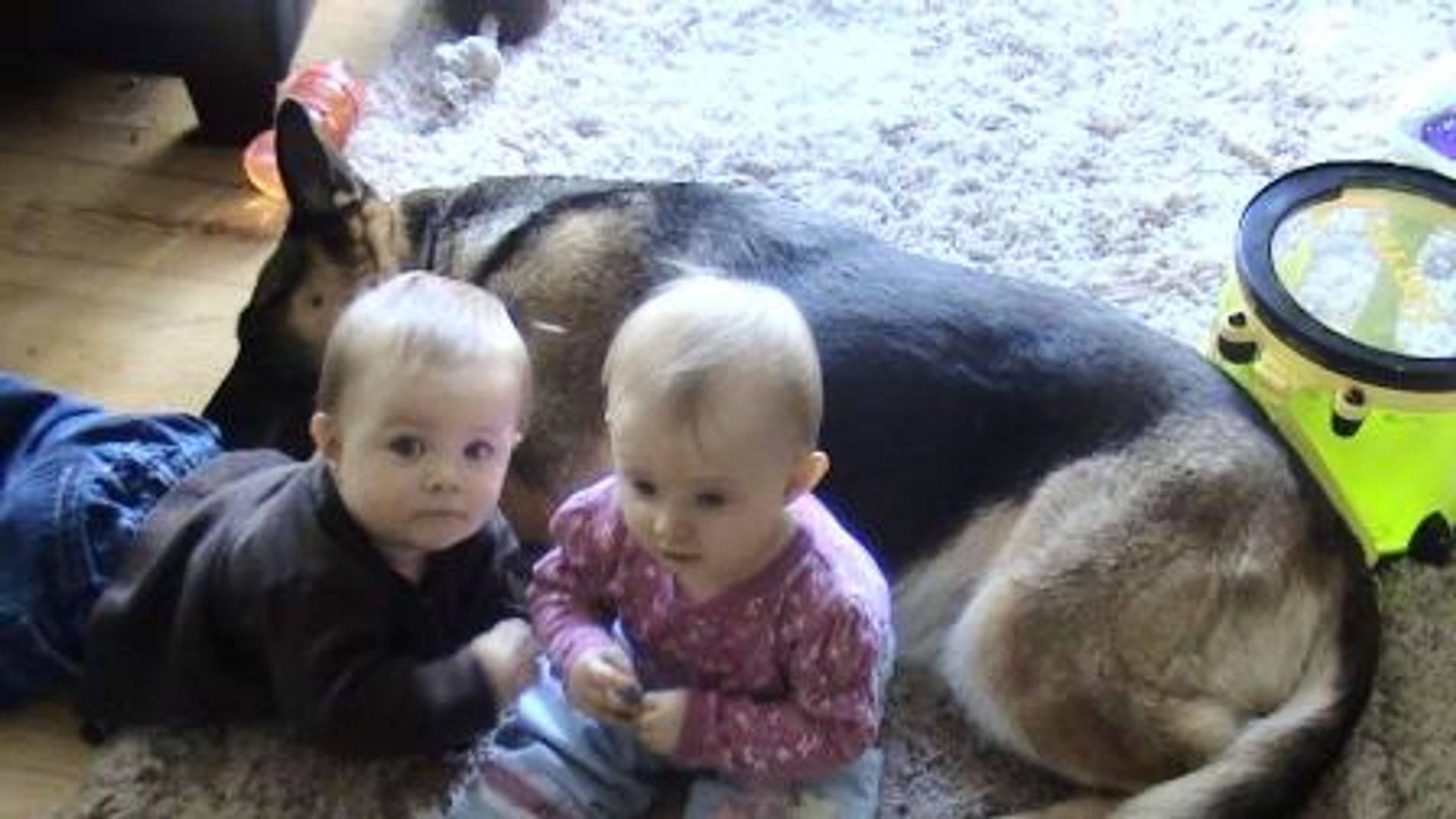 """""""Irish"""" German Shepherd Dog loves our kids"""