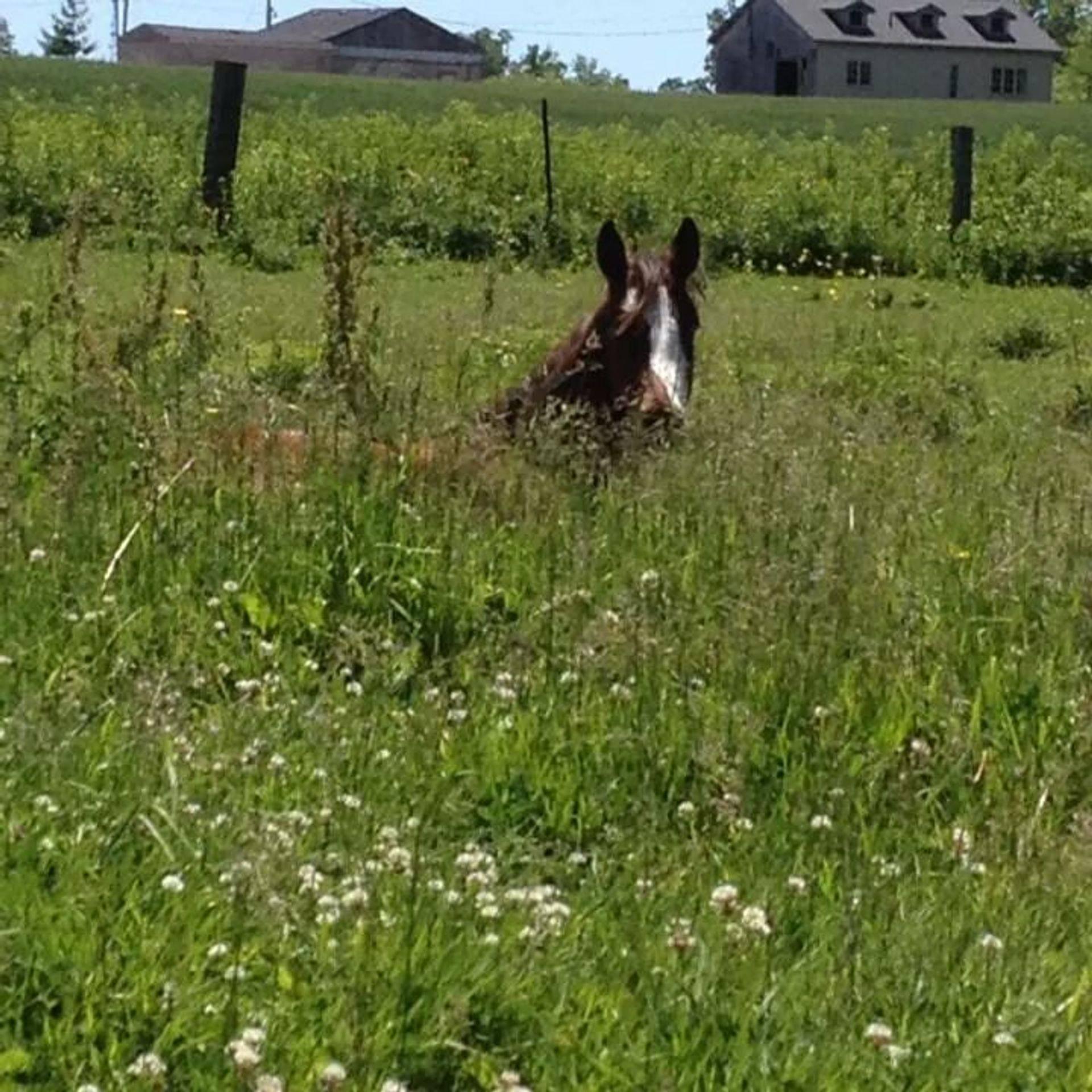 Behind The Bit Equestrian Center