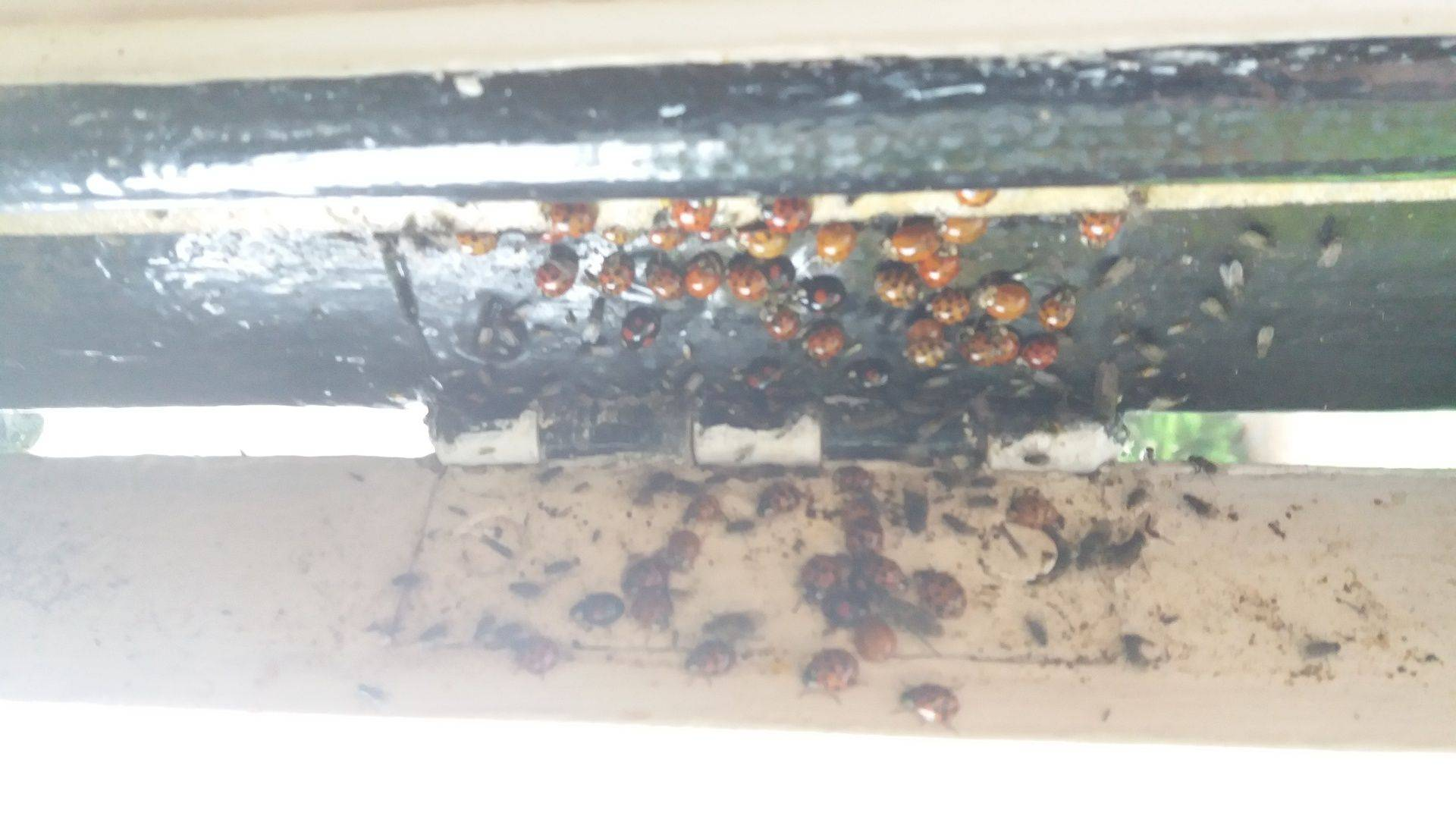 a swarm of bees in Ipswich