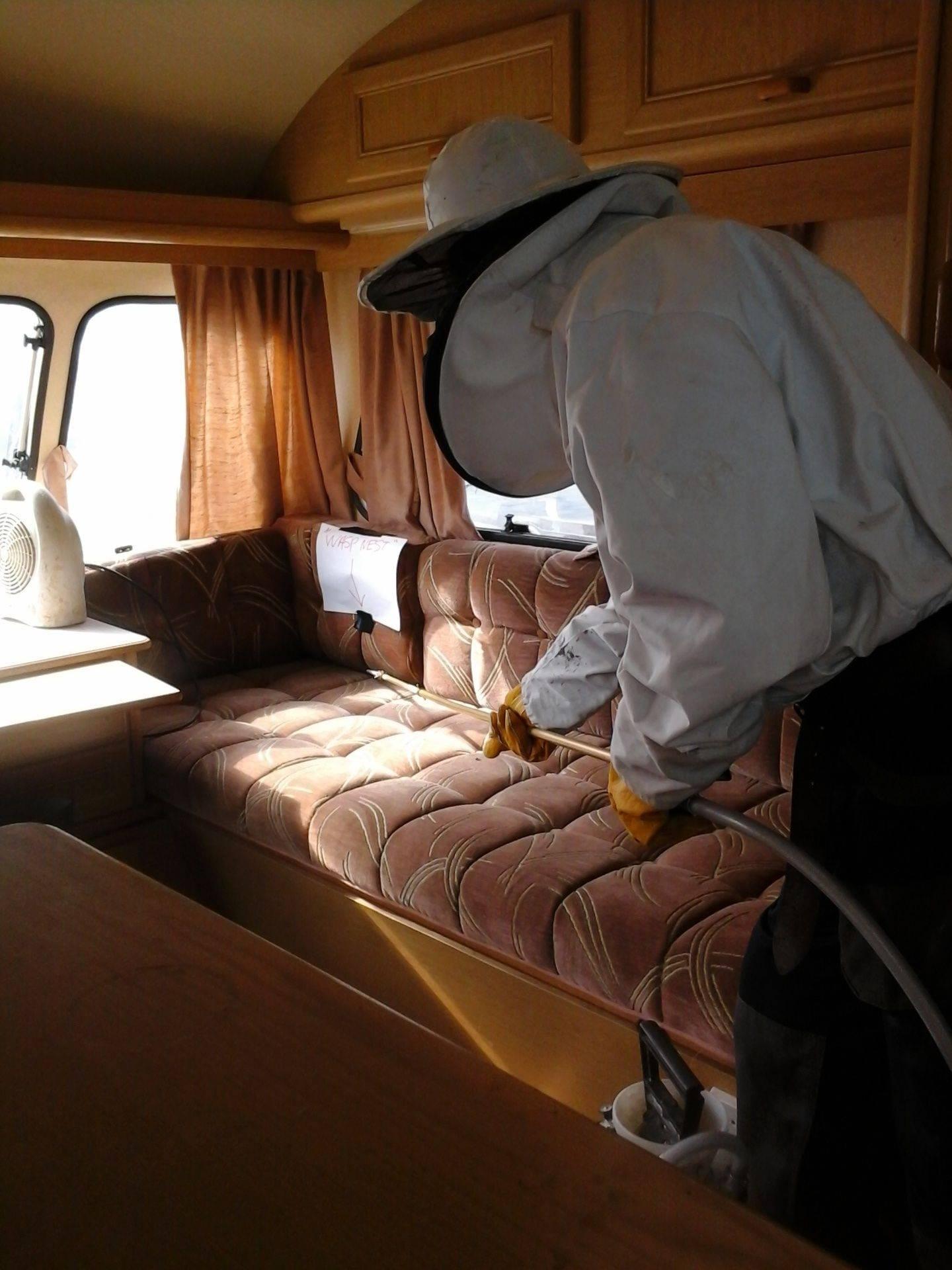 wasp nest under seats ipswich