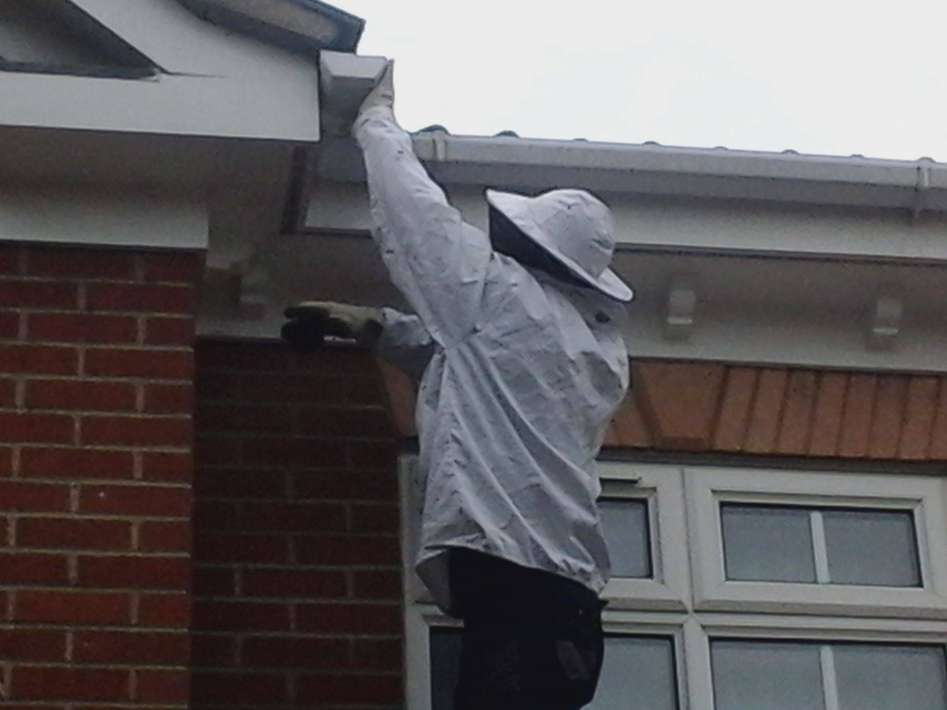 roof top wasp nest treatment ipswich