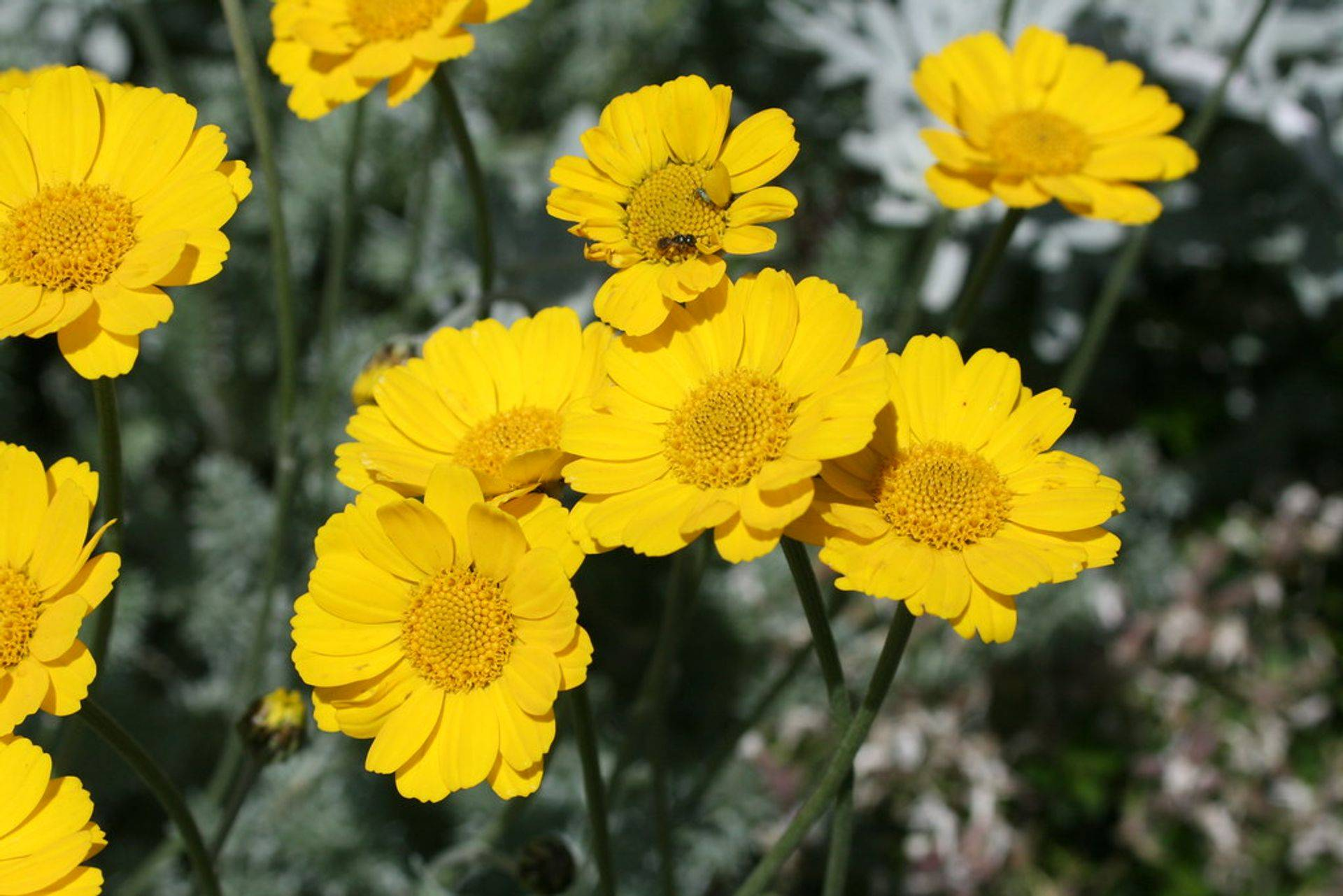 yellow flower-QHHT-Past Life- Hypnosis,