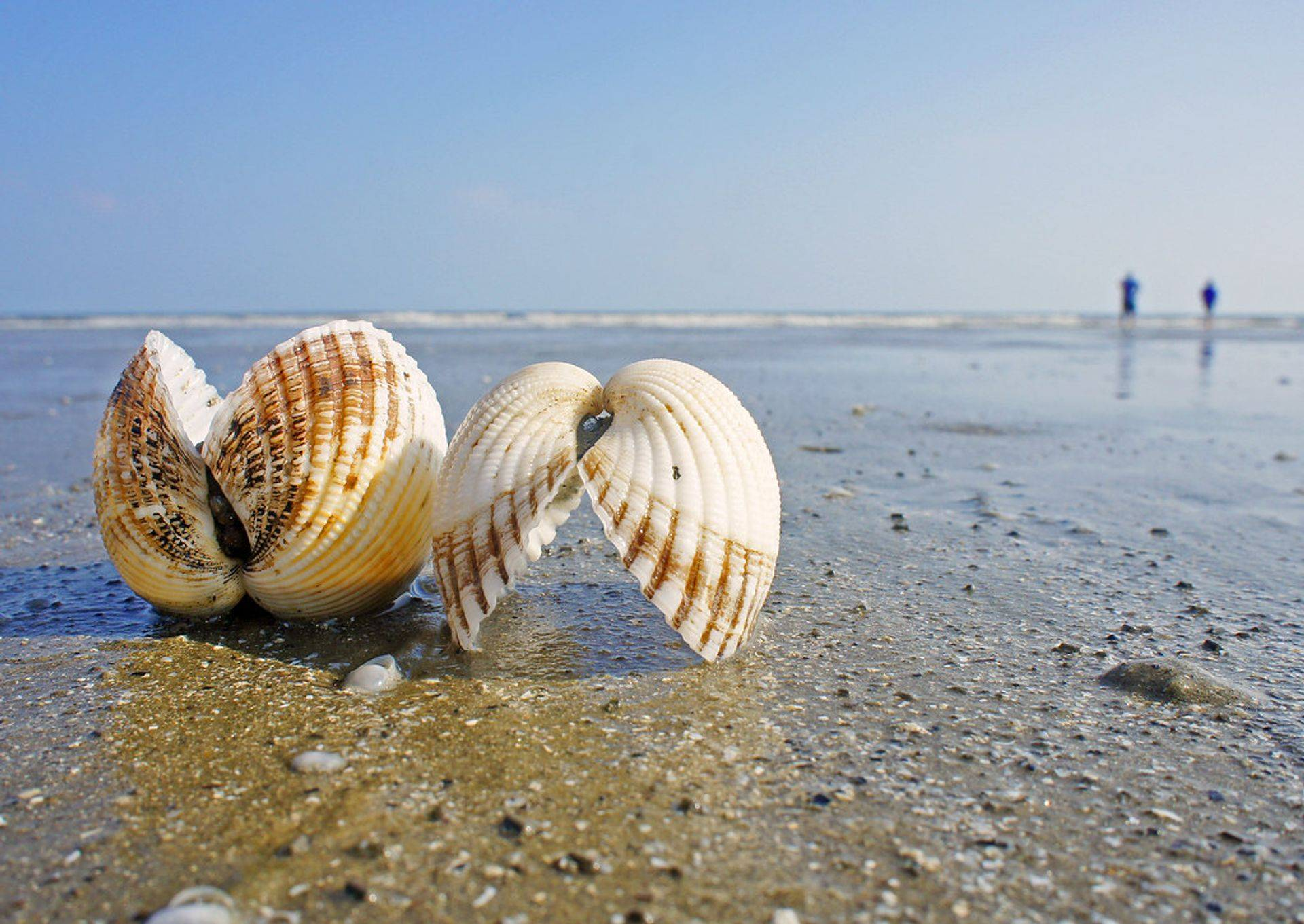 SHELLING CRUISE WITH SEA STAR SAILING