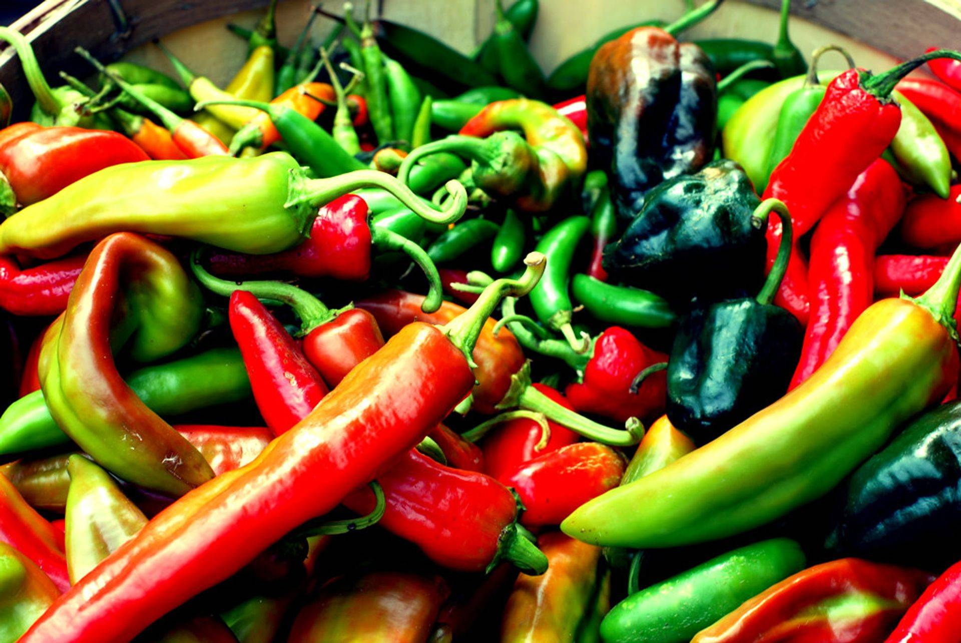Beautiful Chile Peppers