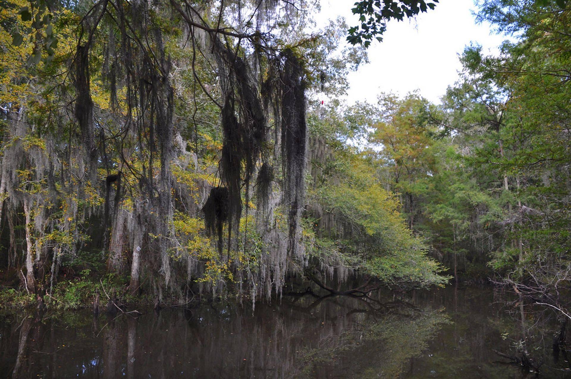 Louisiana Bayous are Beautiful