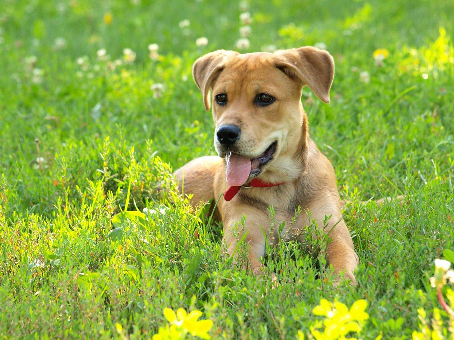 Environment has a huge impact on canine behaviour