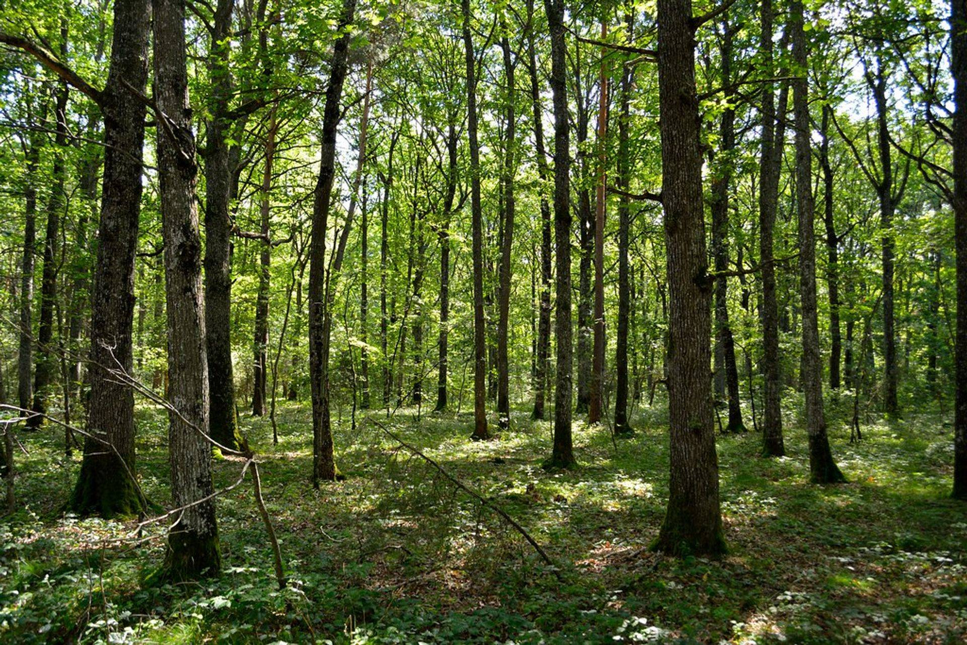 A quite walk in the woods; Is there a better place to experience the presence of God
