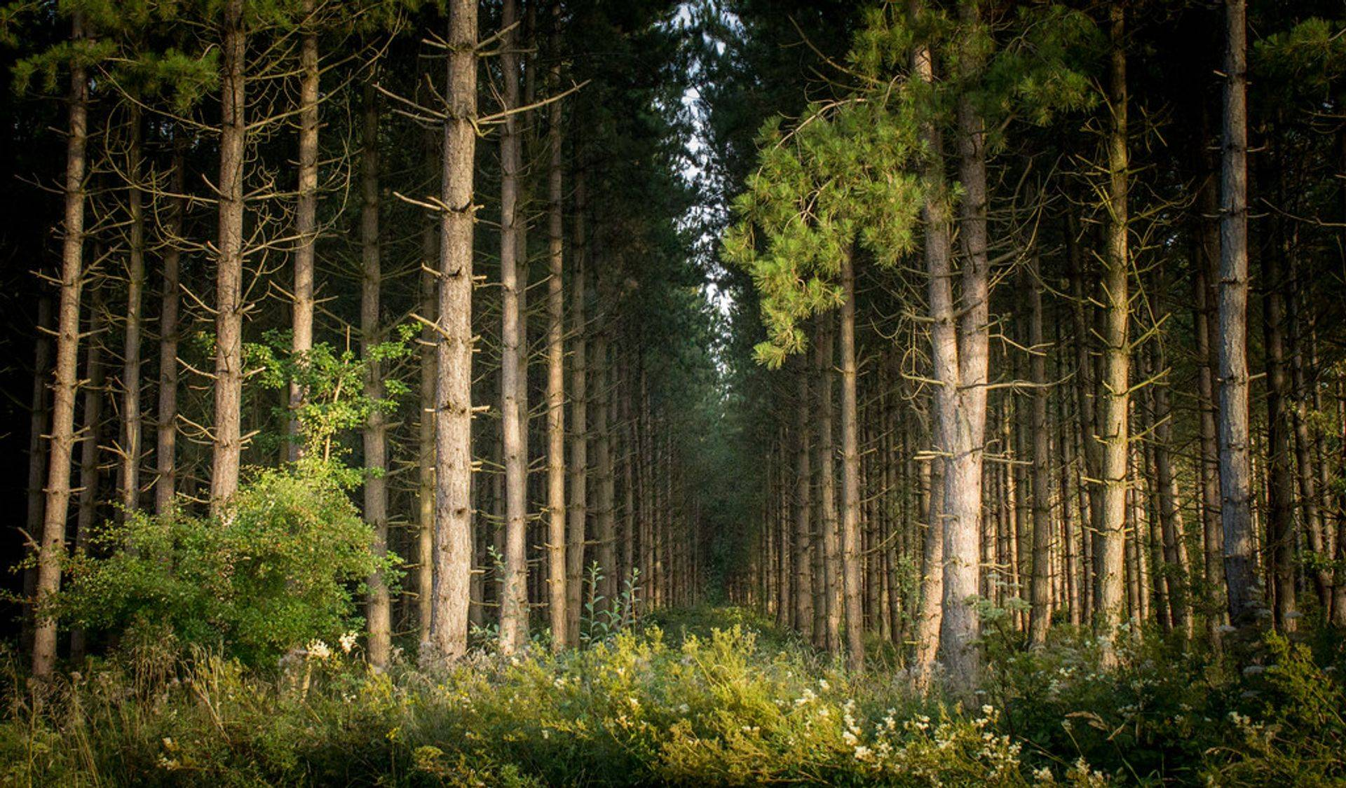 woodland management planning
