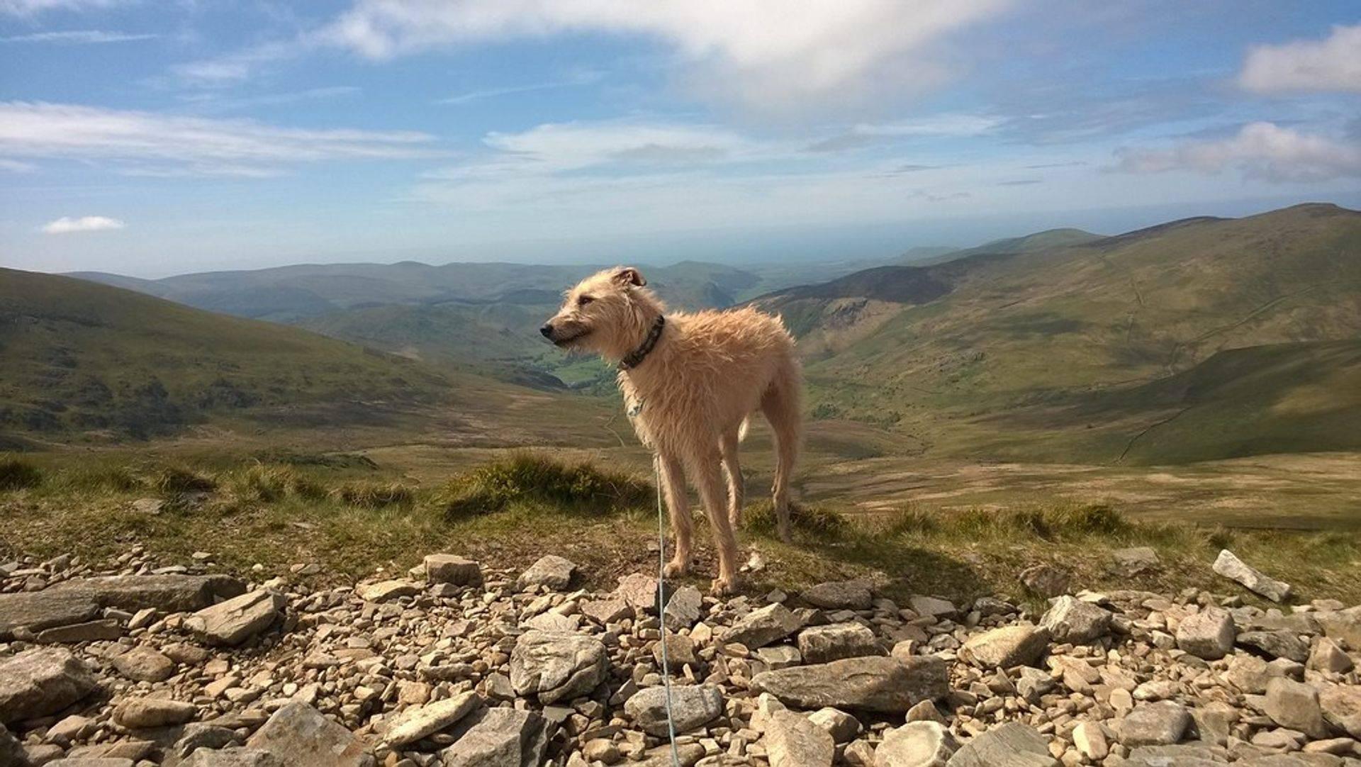 Flexibile Dog Walking service Nr Callington East Cornwall