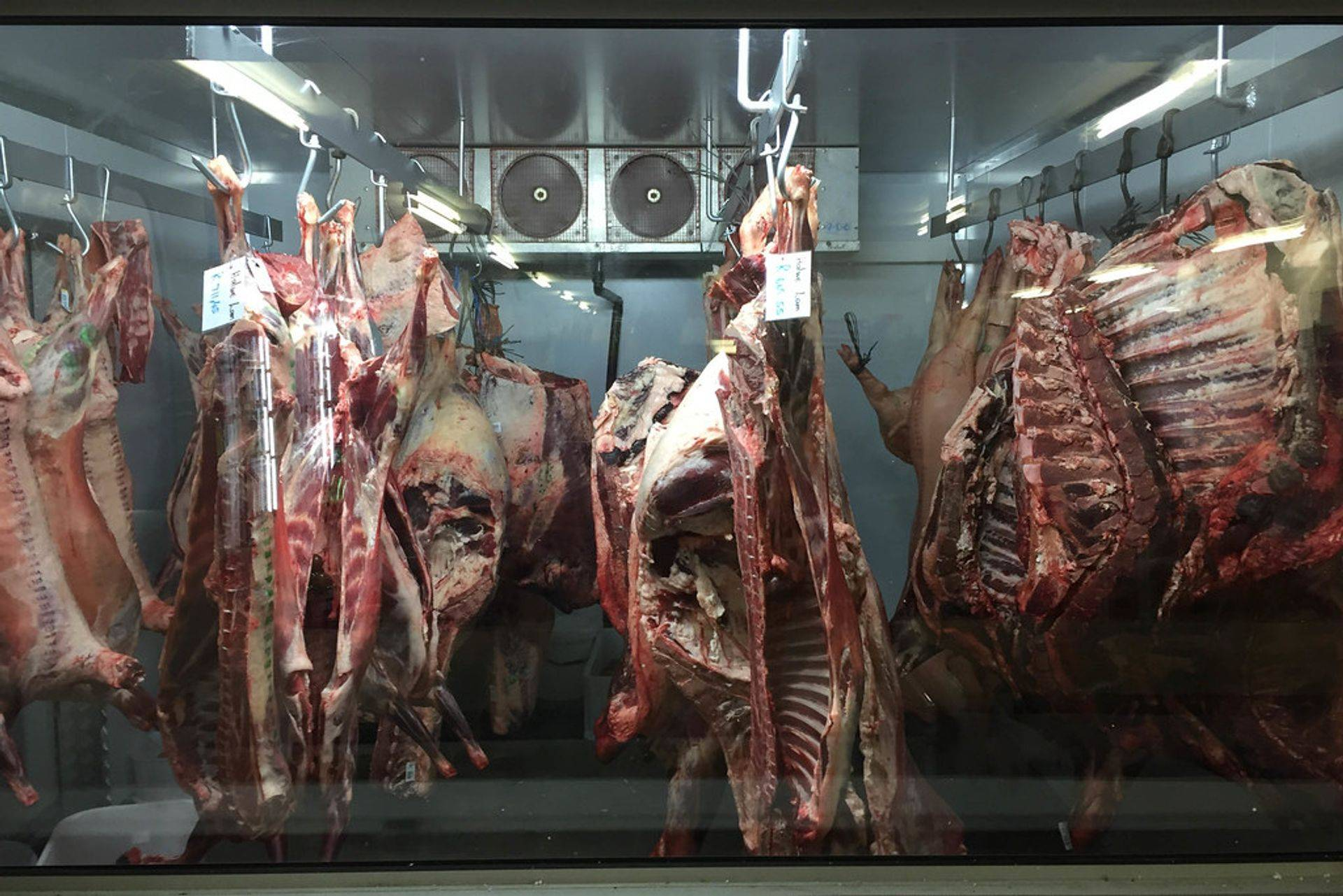 Global supplier of Lamb/Goat Meat & Offals.
