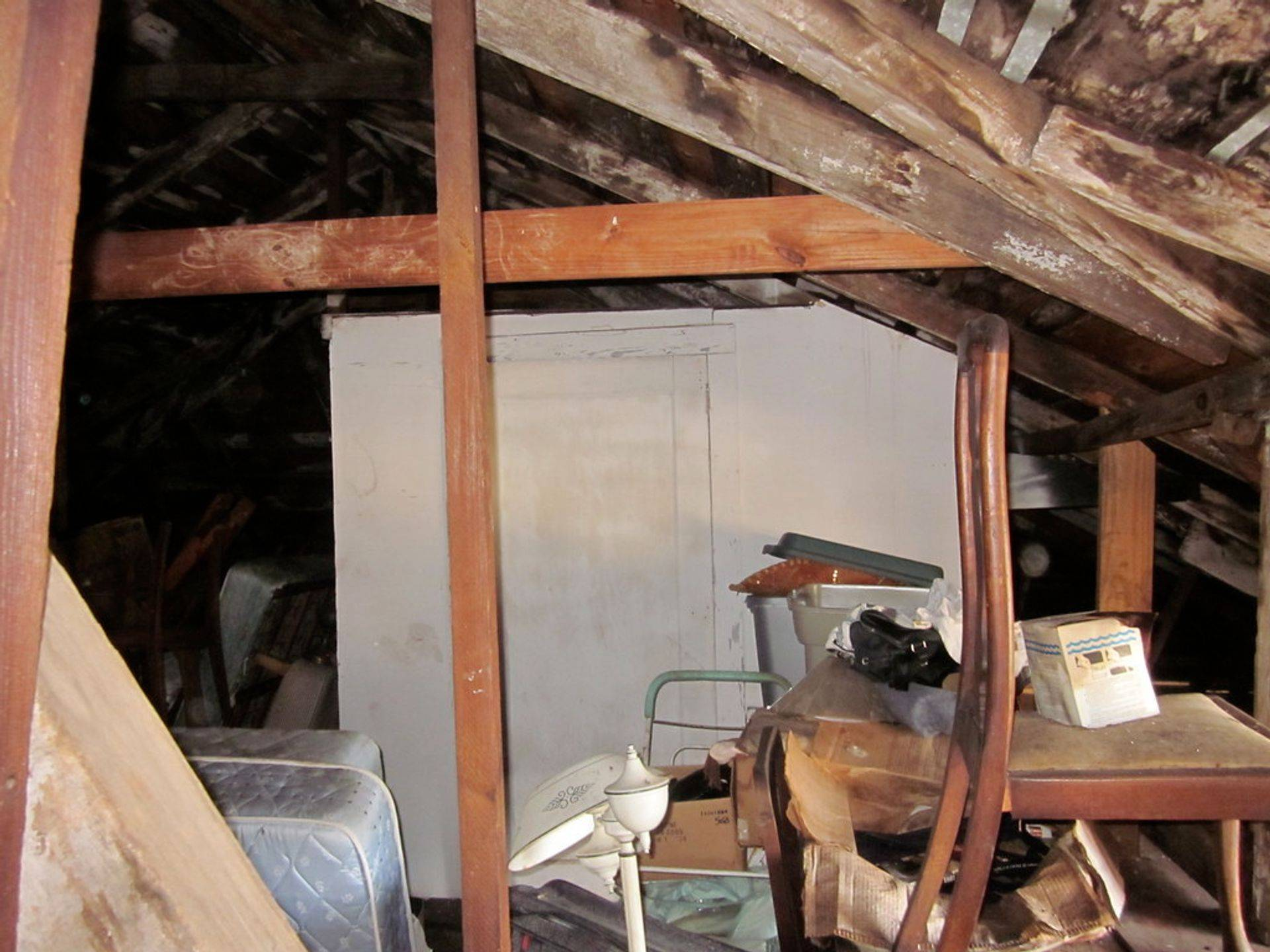 how bat colonies can damage attics