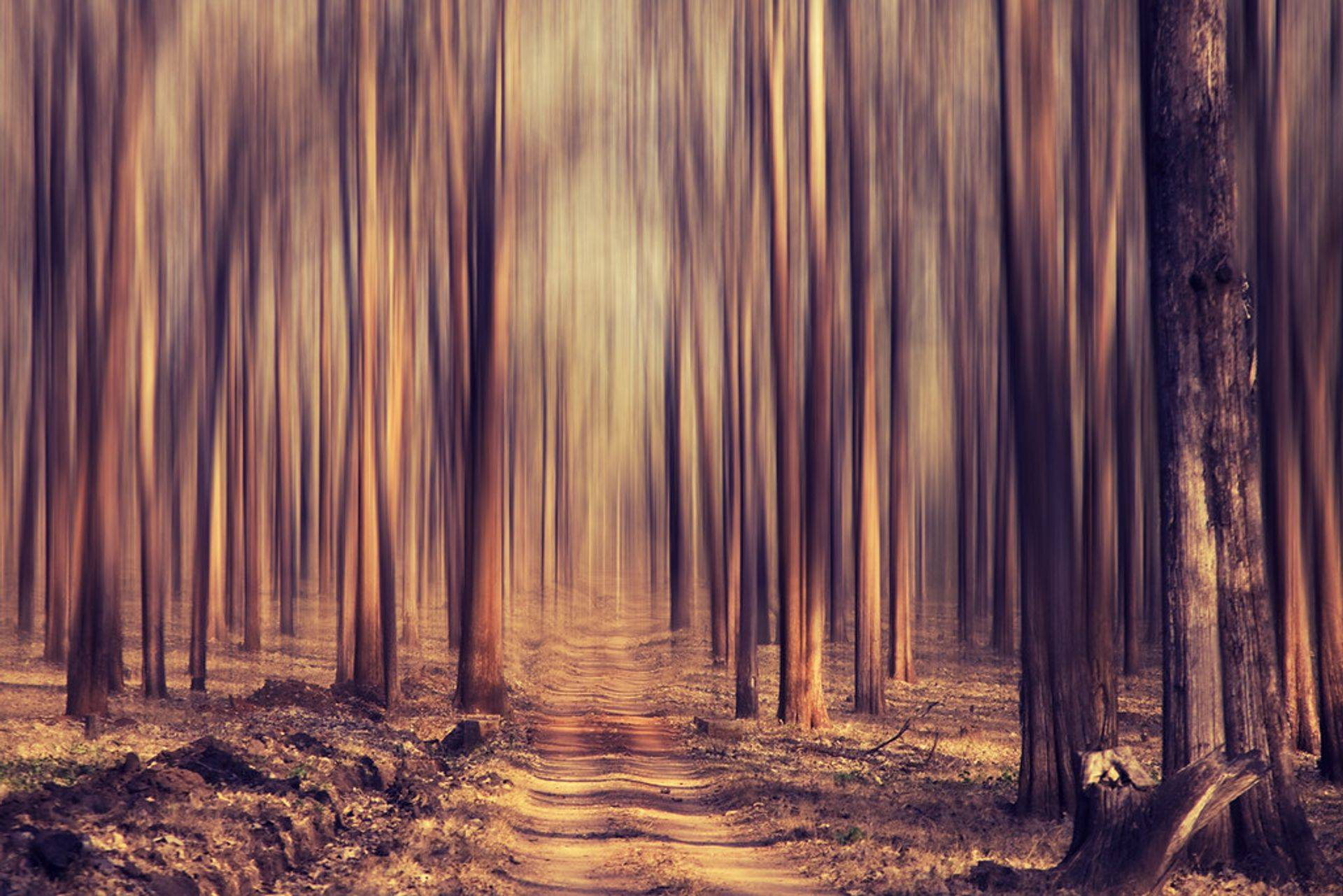 a Forest Dream, from vista print