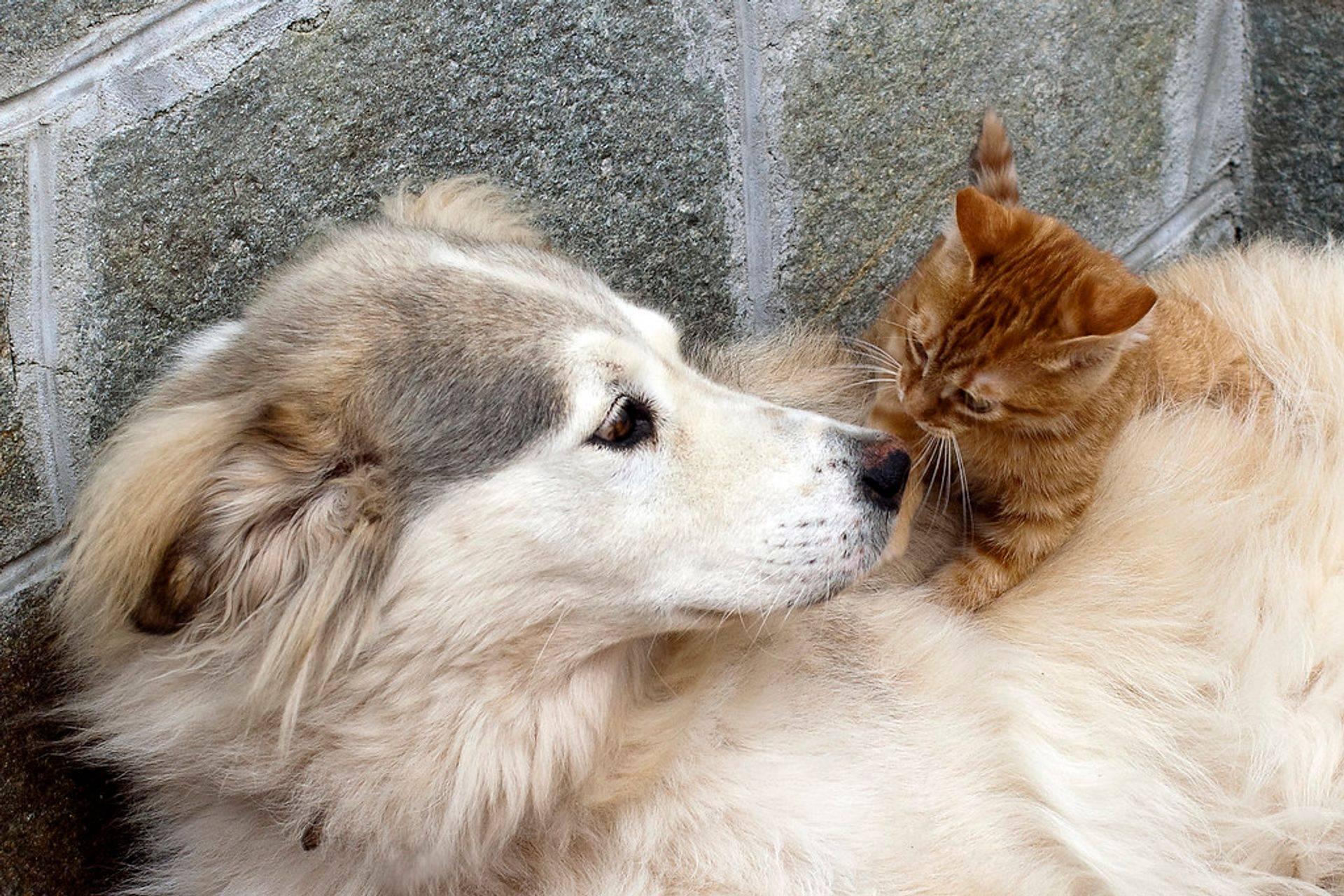 dog, PastLife-QHHT.com