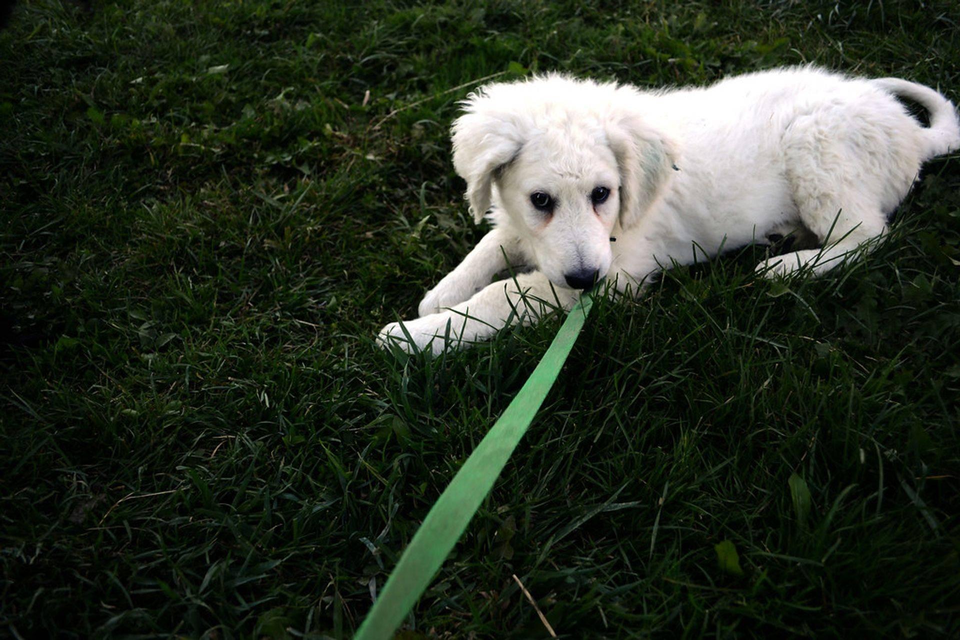 One to One Dog Training or Dog Training Classes
