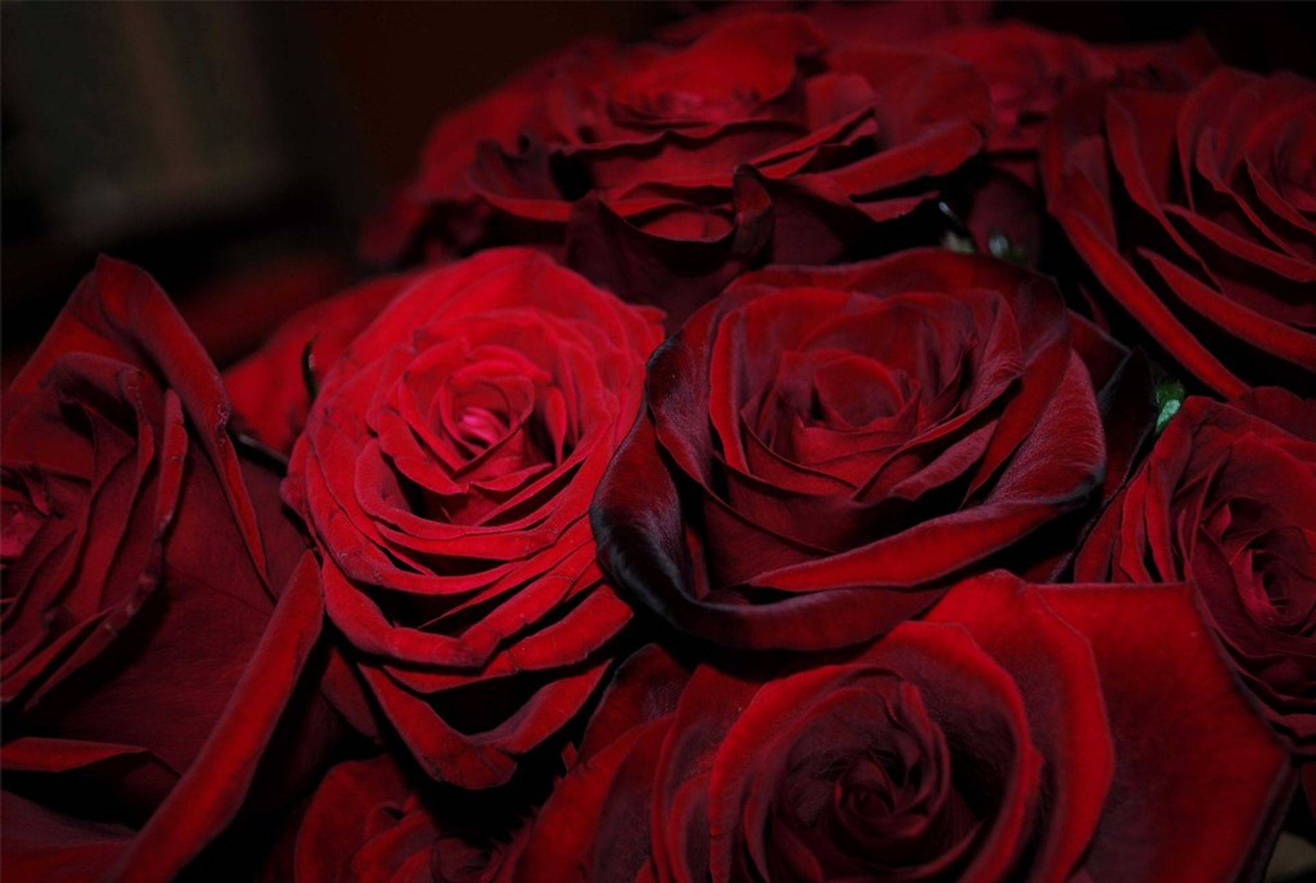 made from oil of damask roses