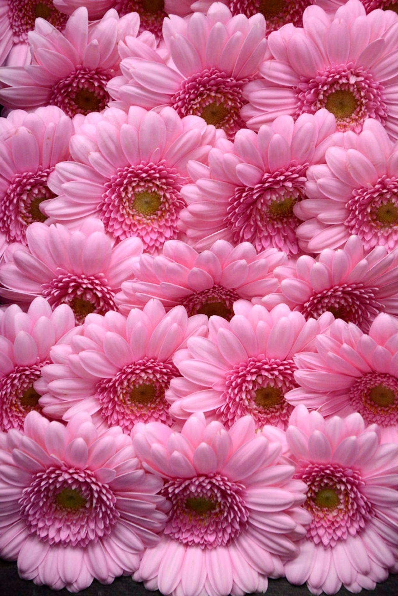 We have loads of gorgeous flowers that are pink in colour.