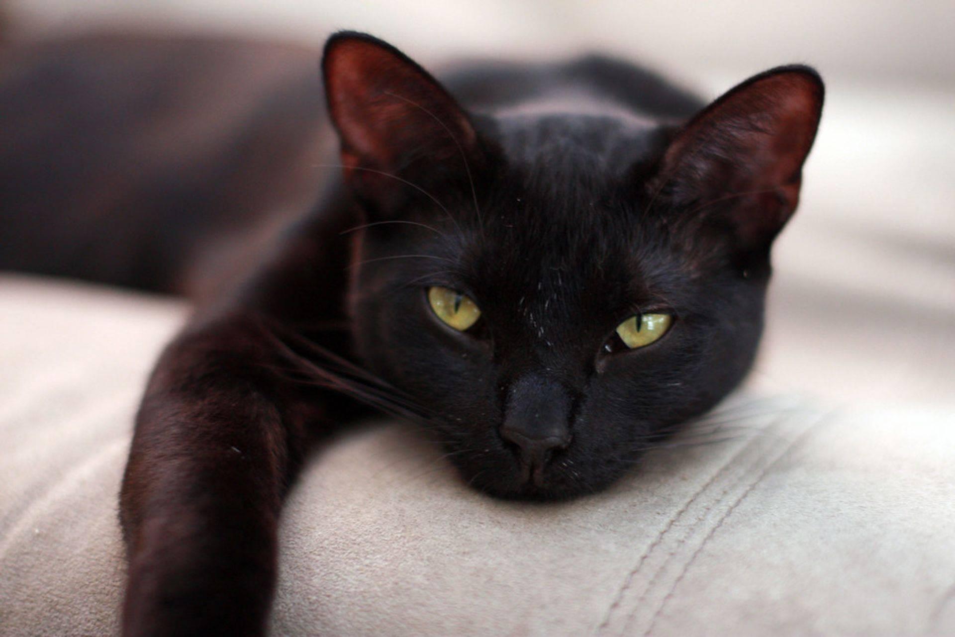 Sleep Cat Adoption Colorado