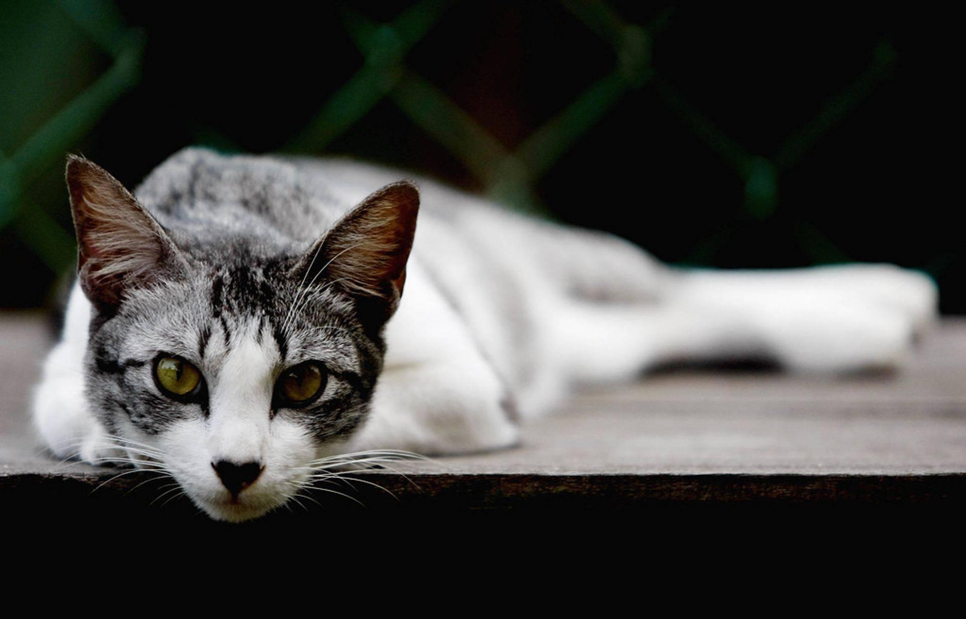 Cat Adtoption Colorad