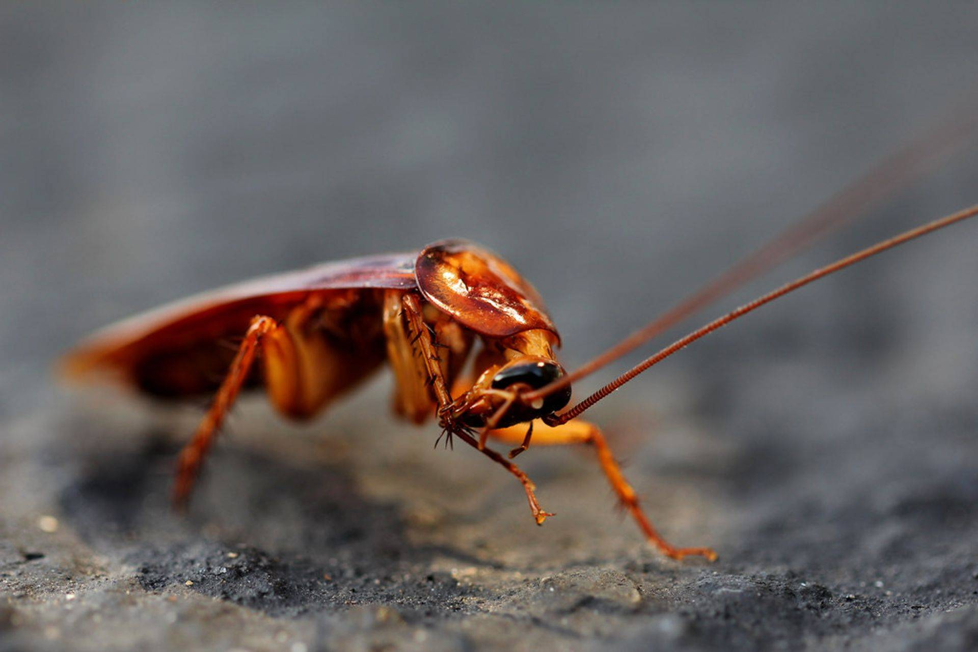WE TREAT YOUR HOME FOR GERMAN ROACHES AND NUMEROUS SPECIES