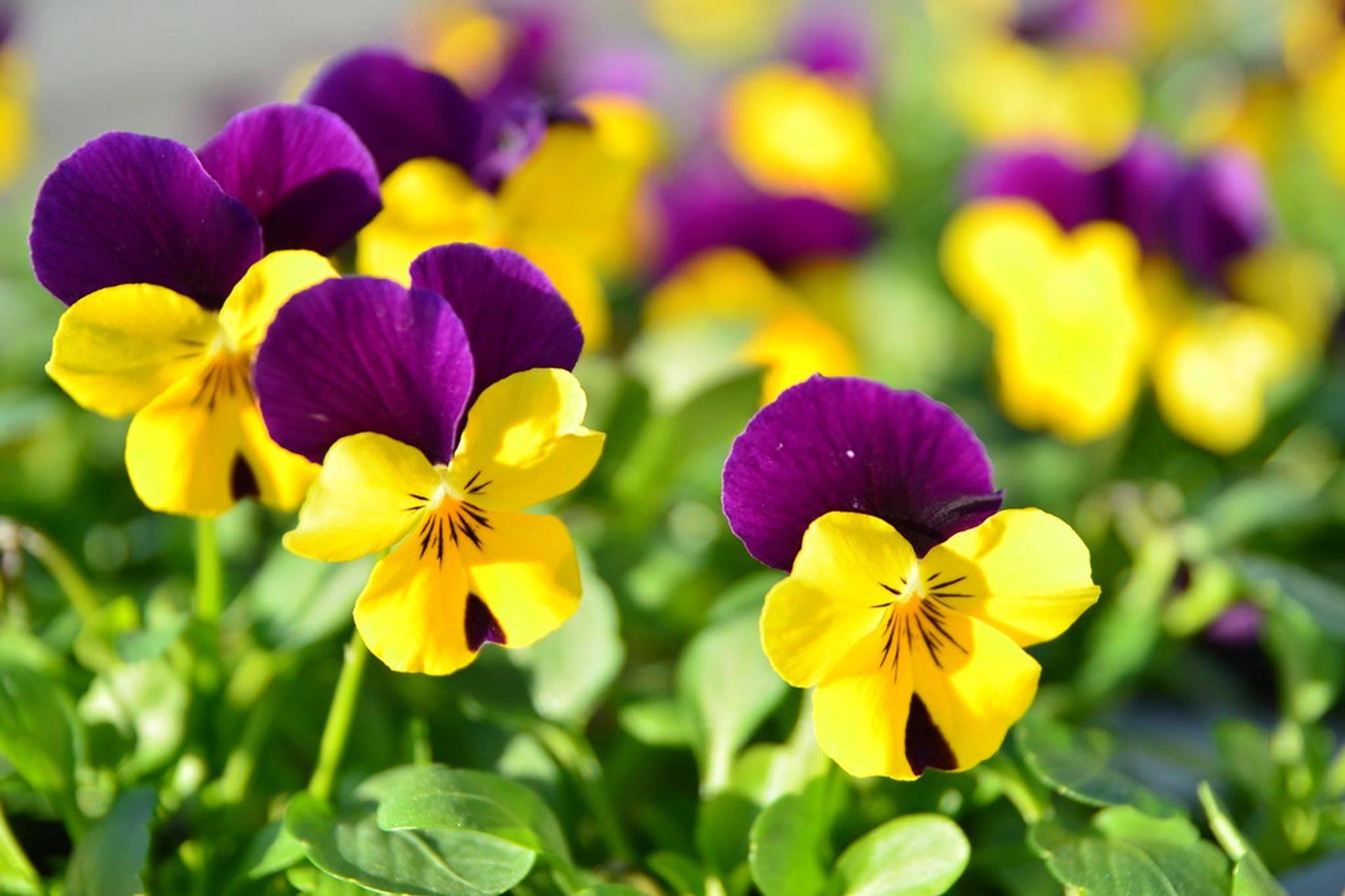 Plantas y comercio de Riverview Flower Farm's Florida Friendly;