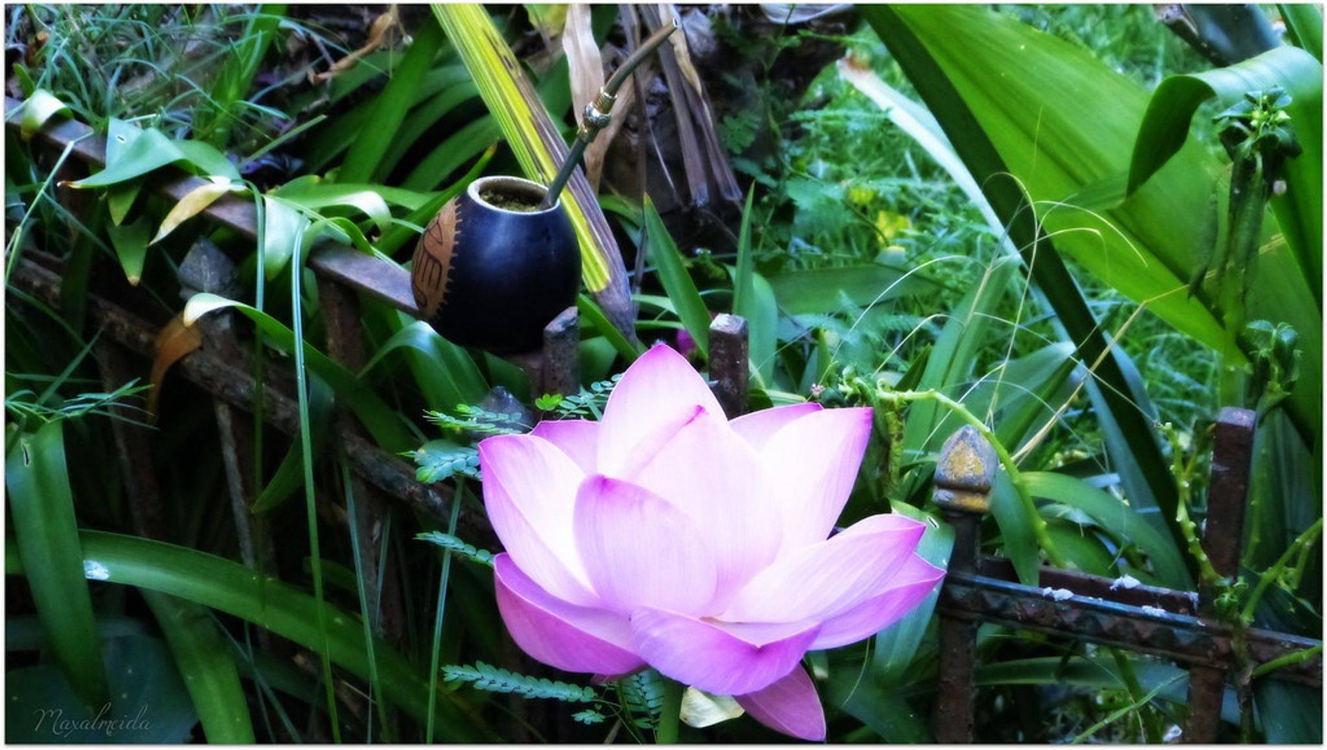 Die Lotosblüte repräsentiert Leben, einen neuen Anfang und die Möglichkeit sich zu verändern