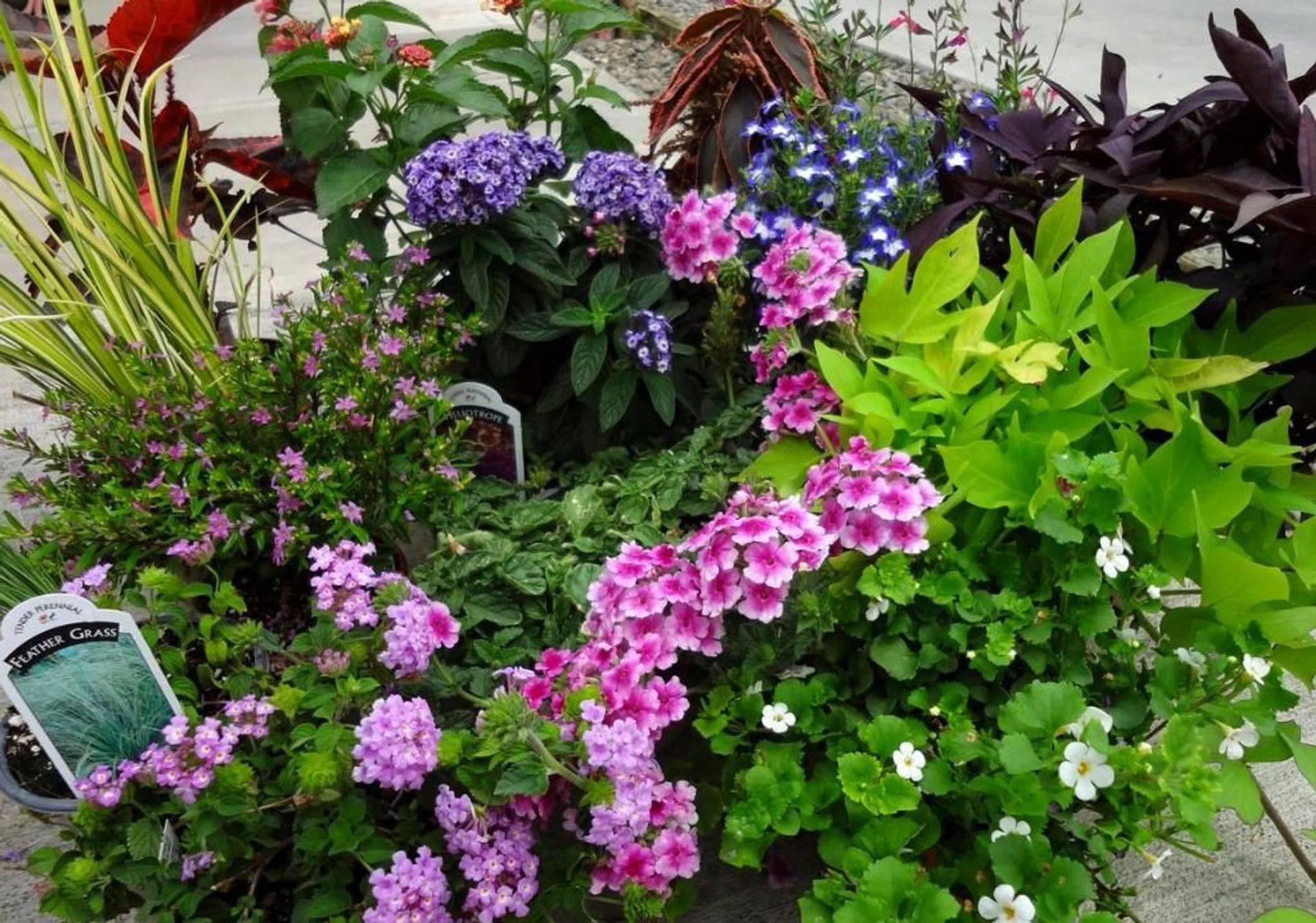 Many Perennials!