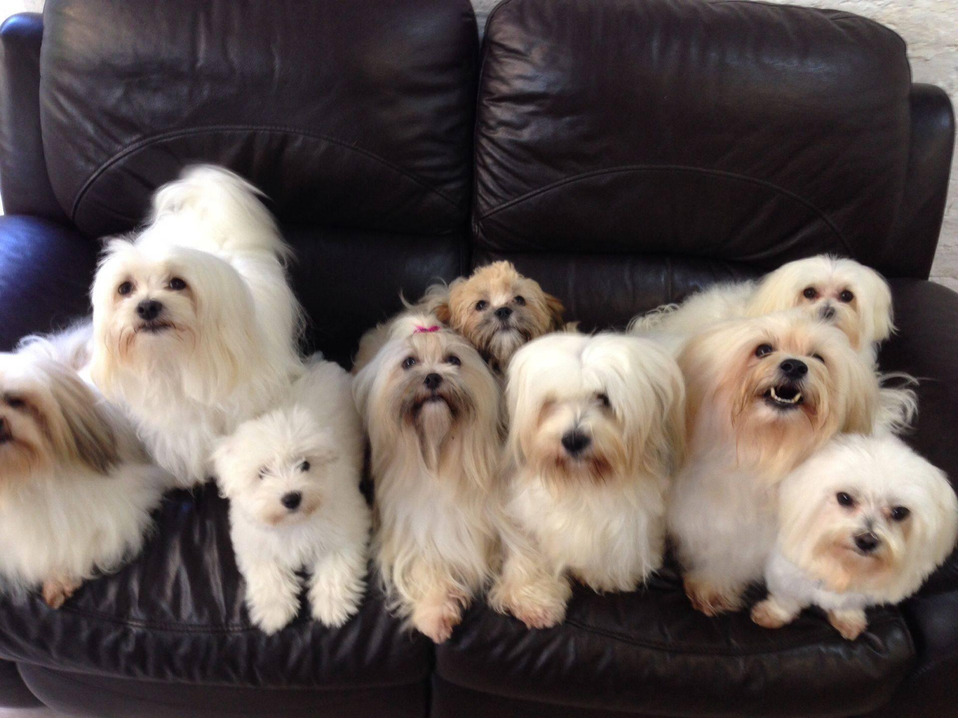 Dog Grooming Melksham