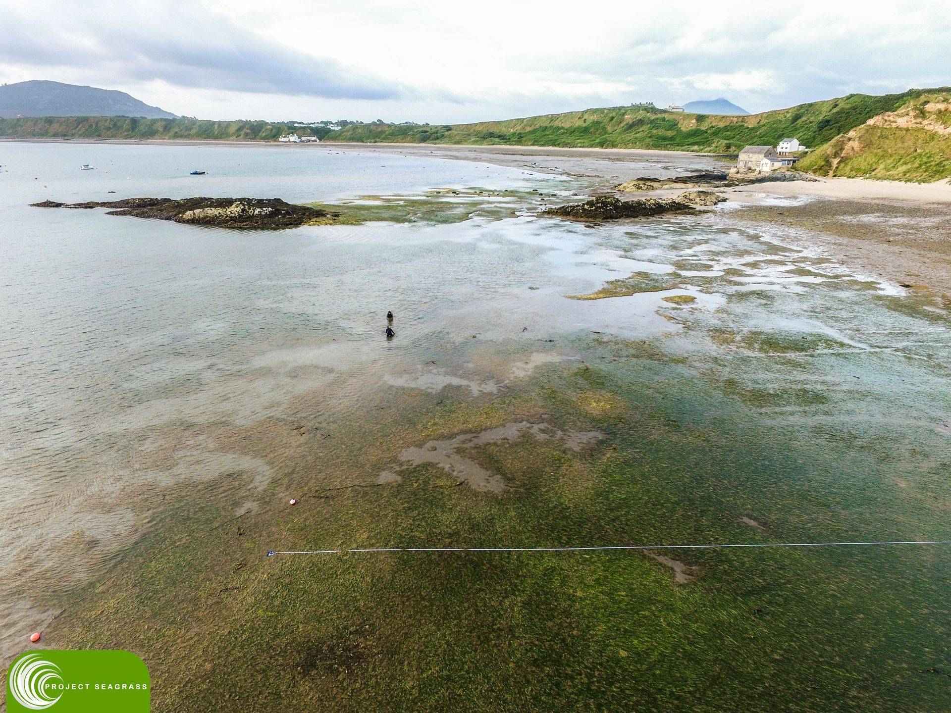 Seagrass Research in Porthdinllaen, Wales