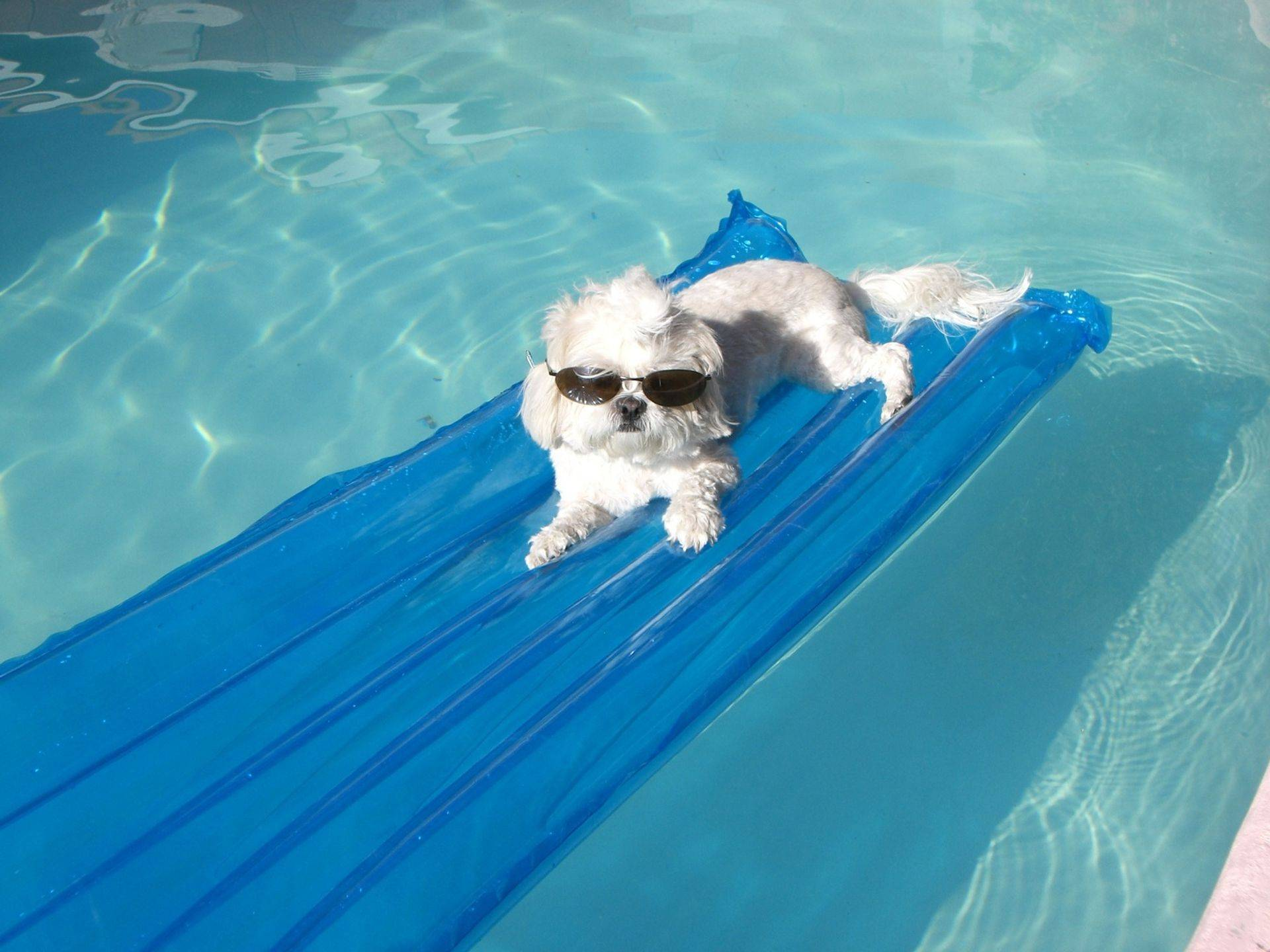 "Want your pet to relax like this? Purchase our ""Calming Package"" with your next pet sit!"
