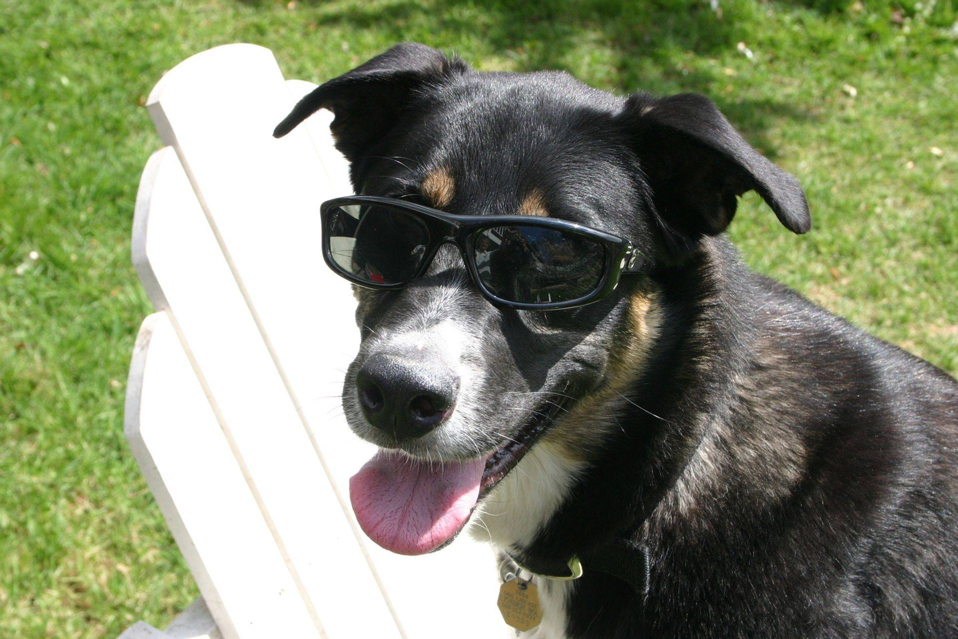 Let your dog stay cool all year with our dog behavior training