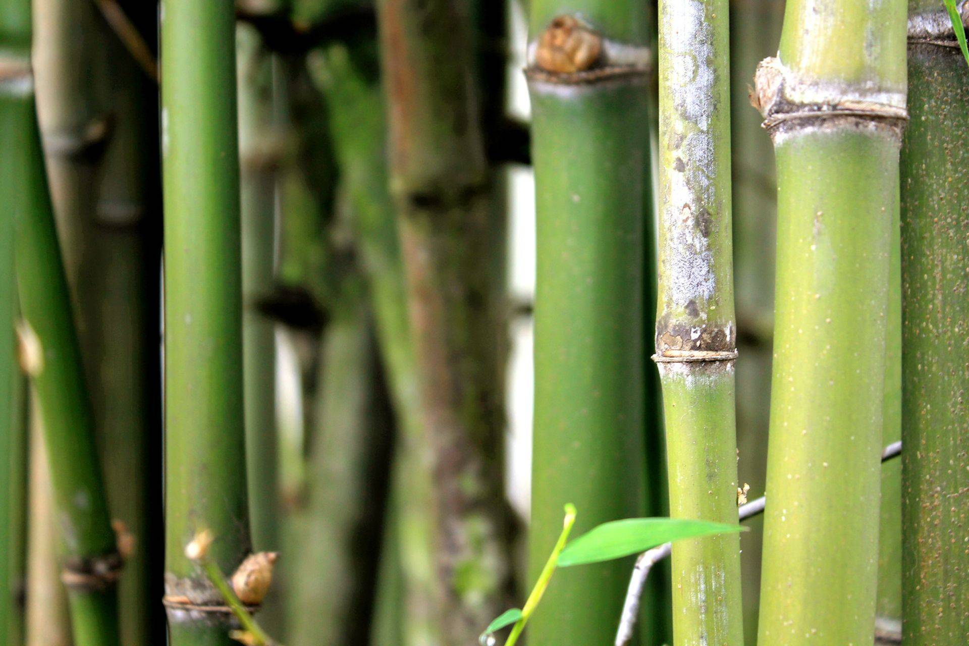 "Be like the bamboo: ""The higher you grow, the deeper you bow"""