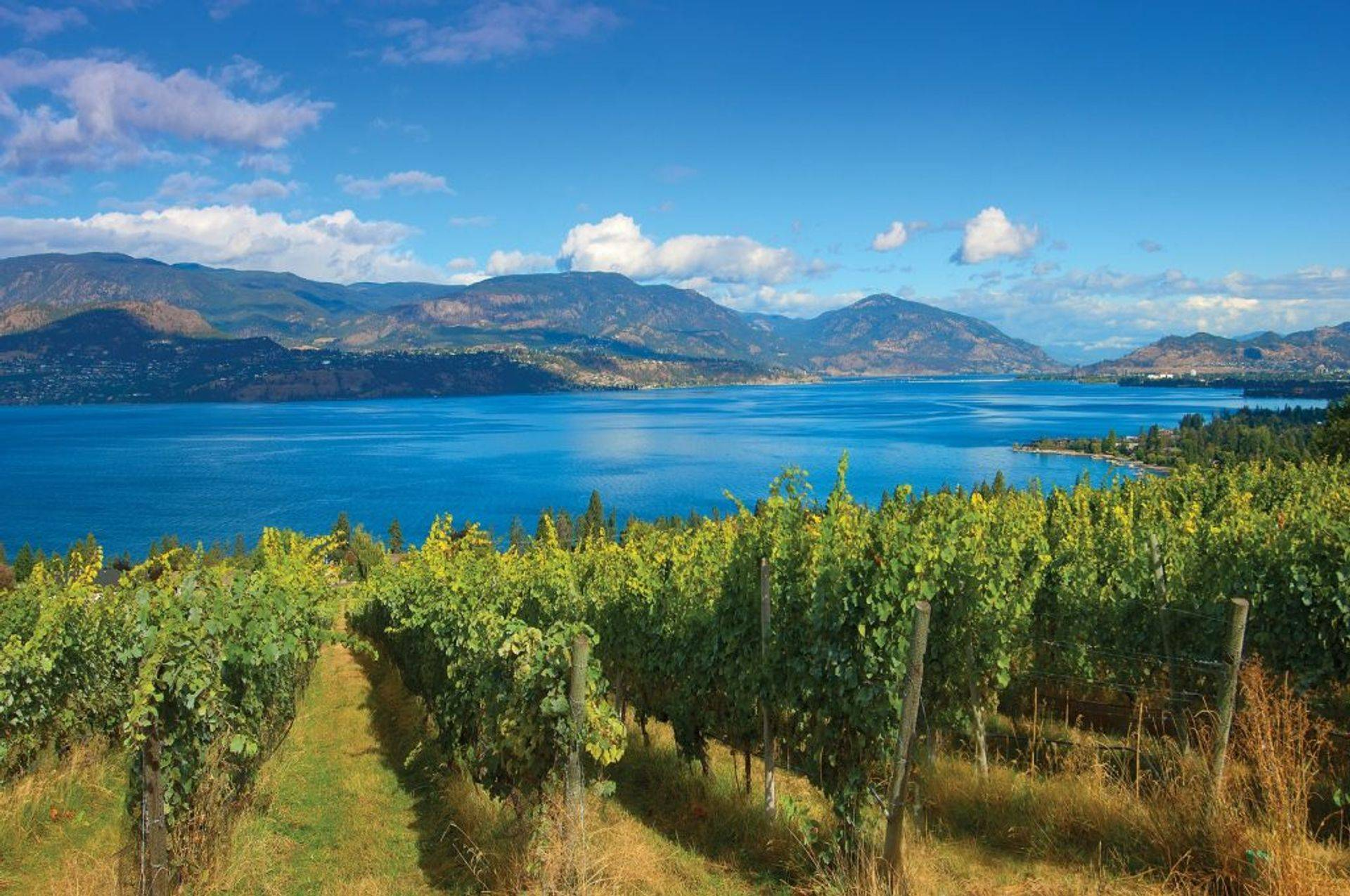 Say High to Okanagan Tours adventure tours for individuals and groups tours.