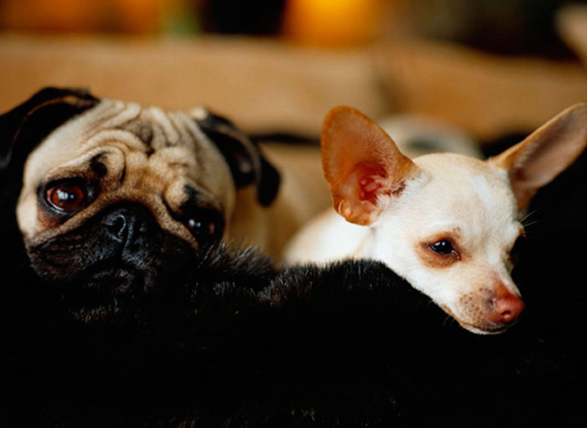 Dog Sitter Pet Services, Pets Sitting , Dog Walking, House Sitting, Pet Sitter , dog walker , Pet Taxi, dog bathing, brushing, Spring Texas, The Woodlands , Houston Texas, Cypress Texas