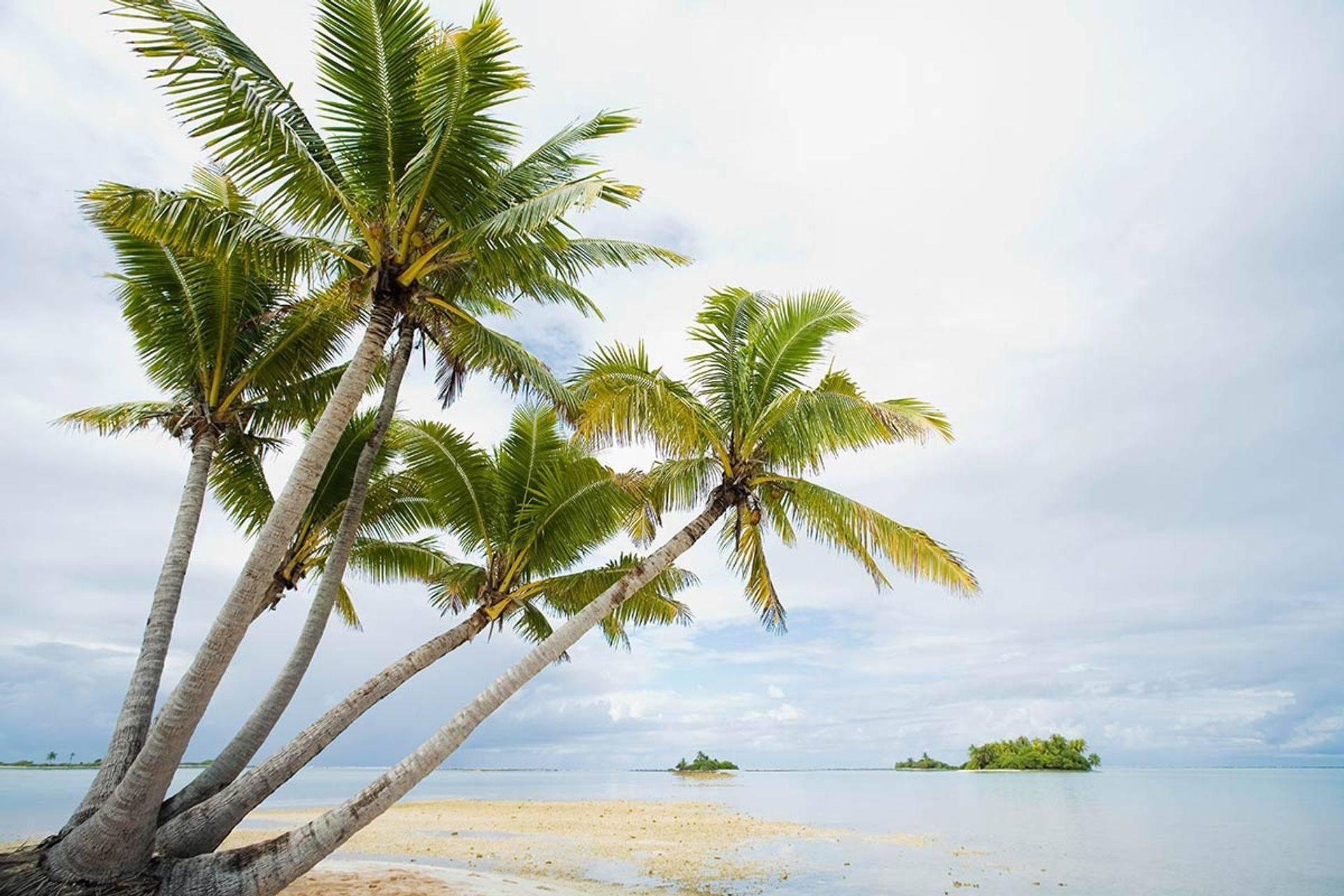 Plage guadeloupe conciergerie karaibe