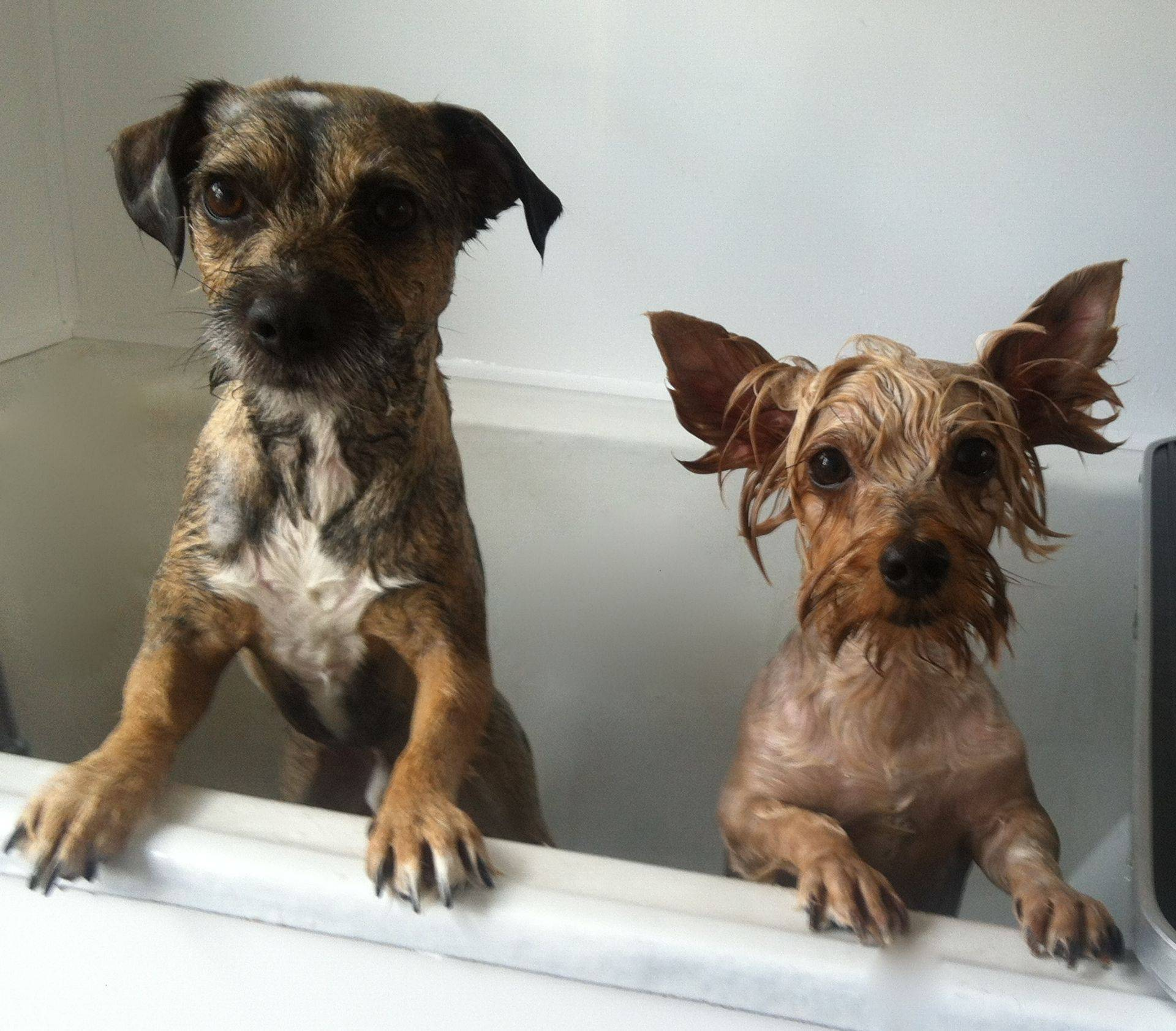 Buddy and Maizy. Its great to have a bath buddy