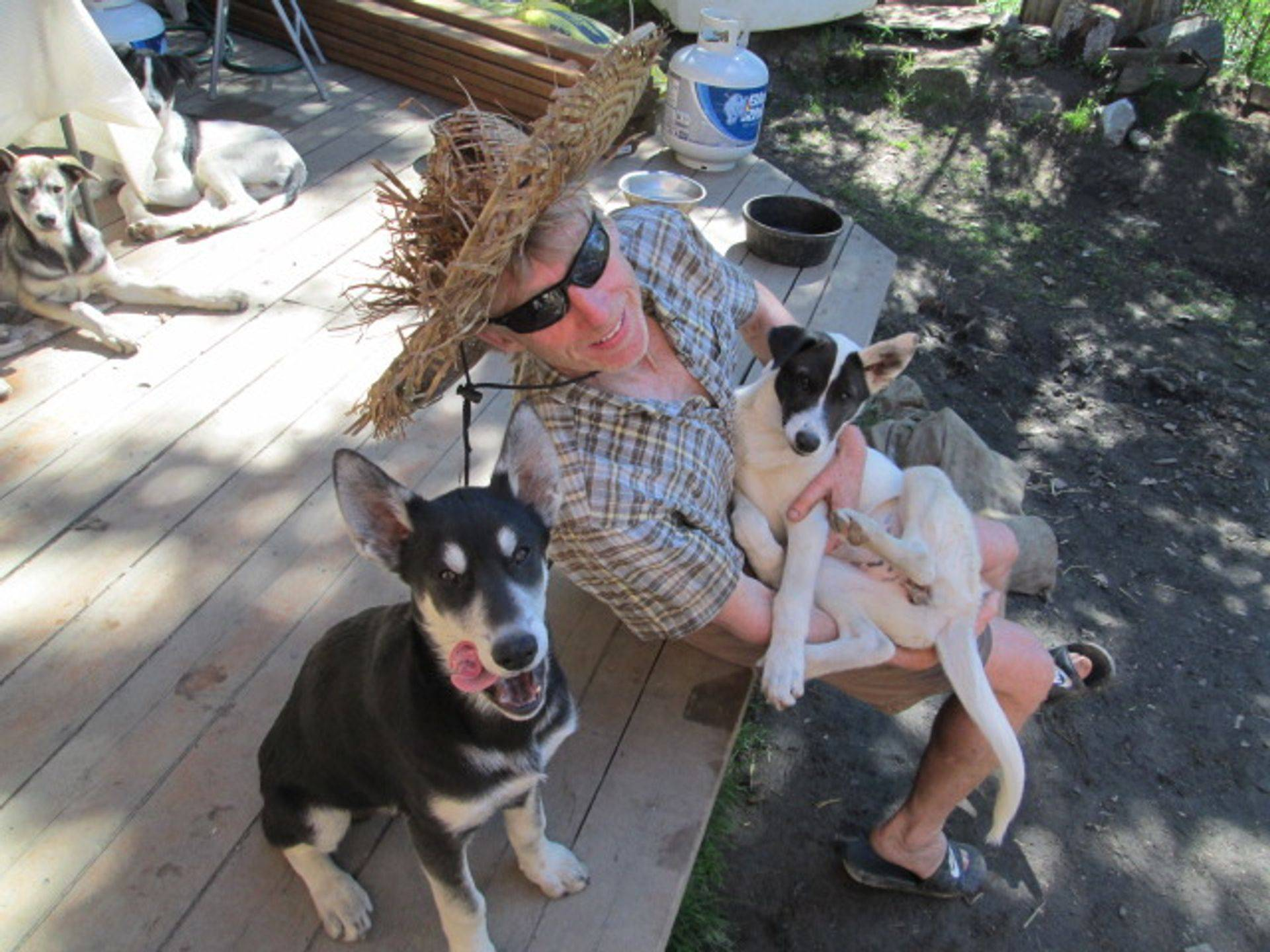 Leggy puppies high on life getting up to mischief-found my straw sunhat and chewed way right  on through