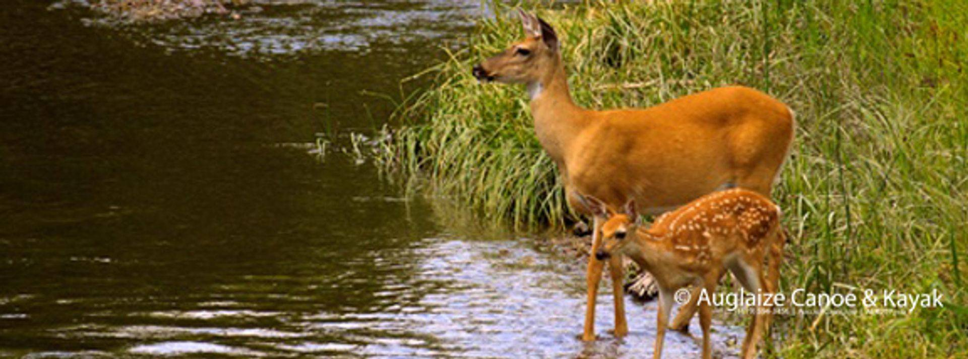 Enjoy the wildlife: deer, raccoons, turtles, geese, ducks, swans, river otters and an occasional sighting of an eagle