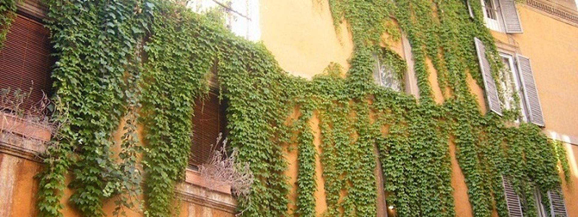 "<img src=""australian womens travel.jpg alt=womens tours,sunset coloured house with ivy in rome, italy "">"