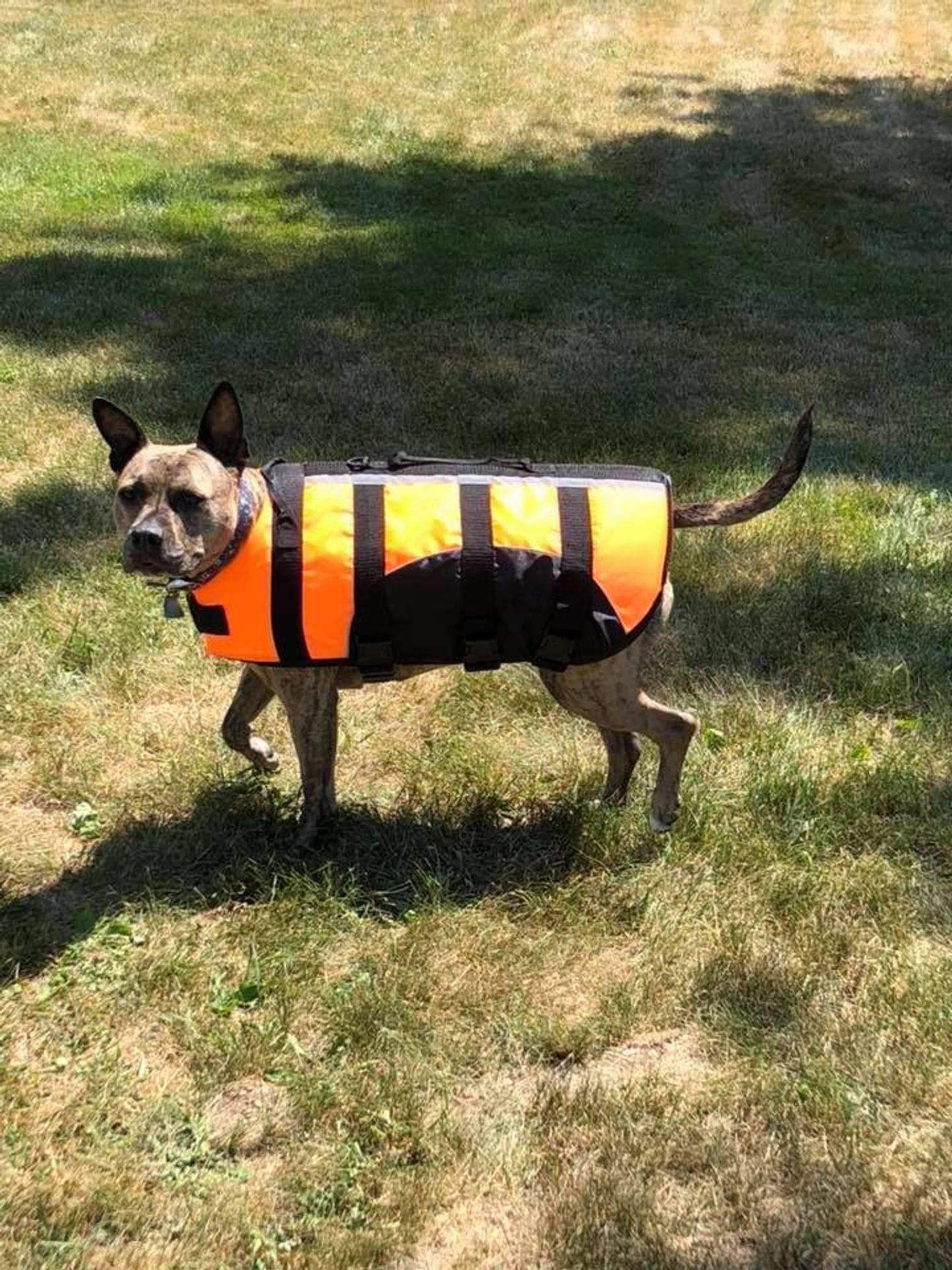 Pandora modeling life jacket