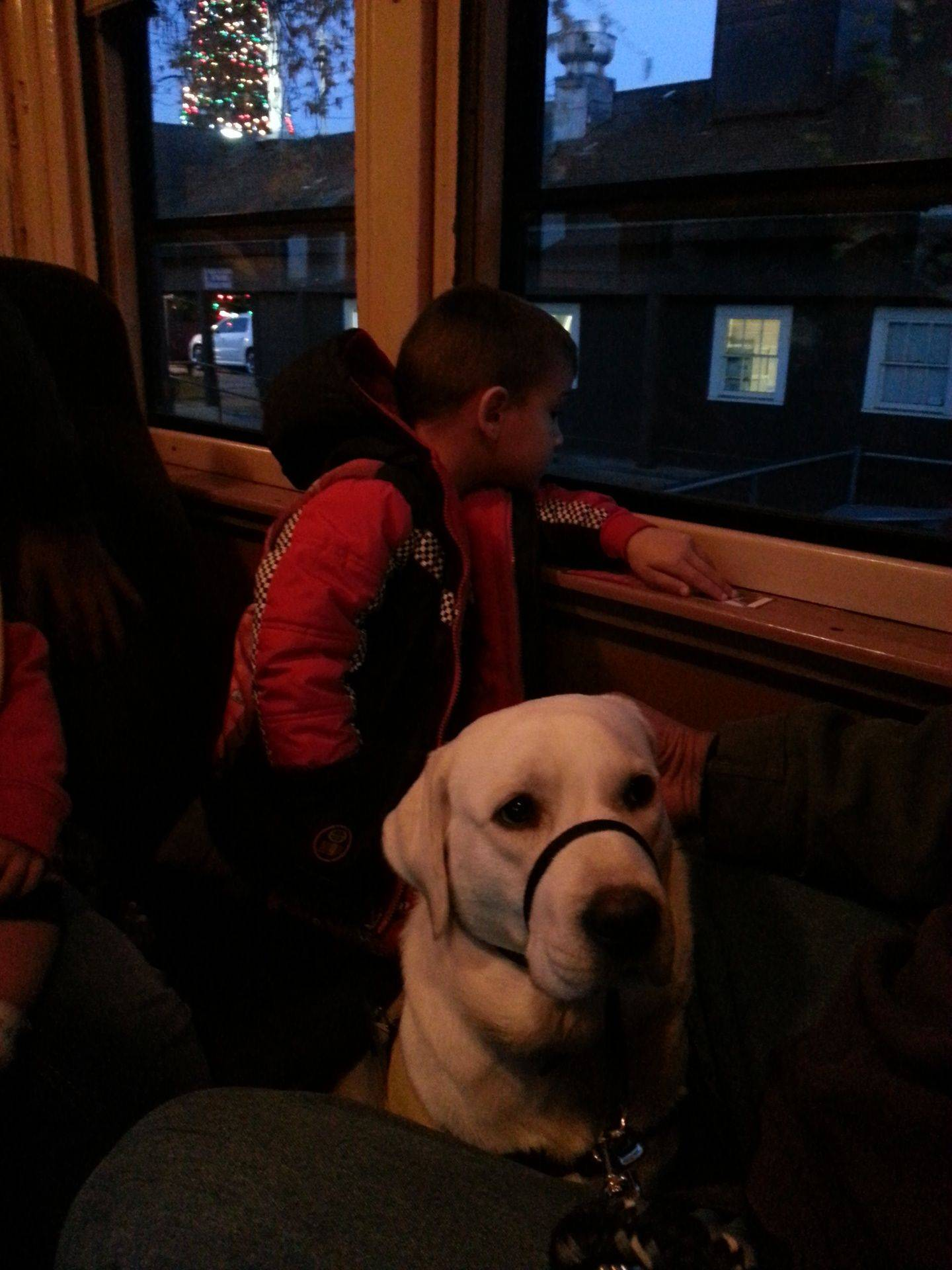 Out dog on the Polar Express