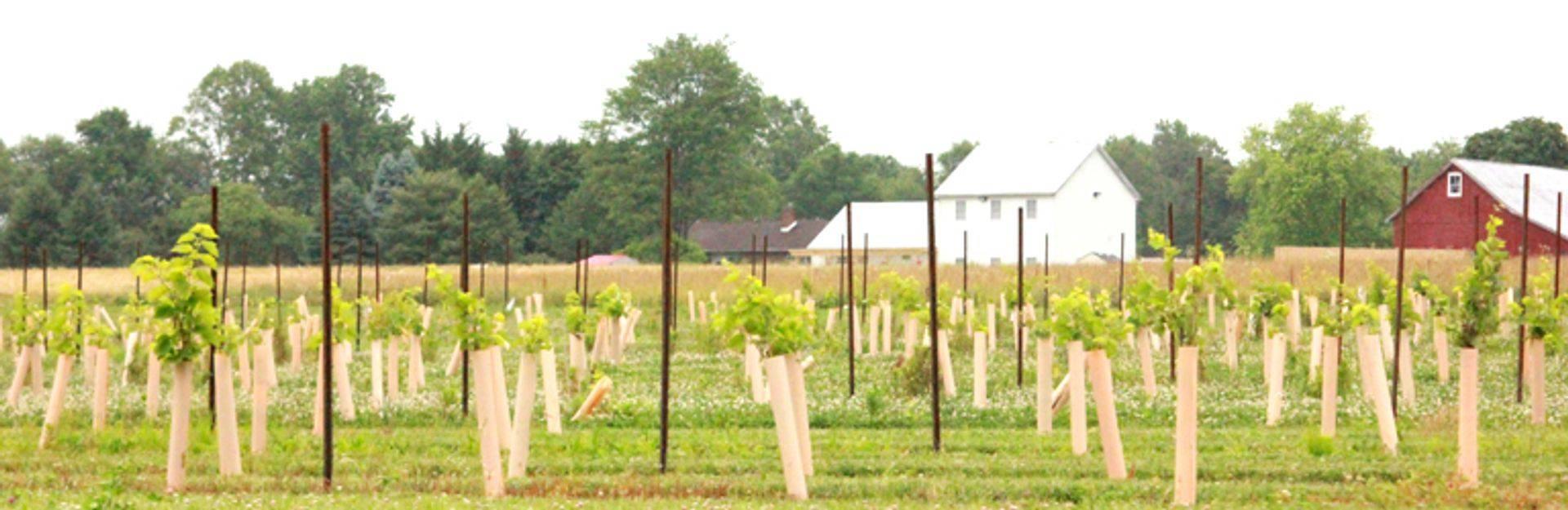 Cecil County Landscape